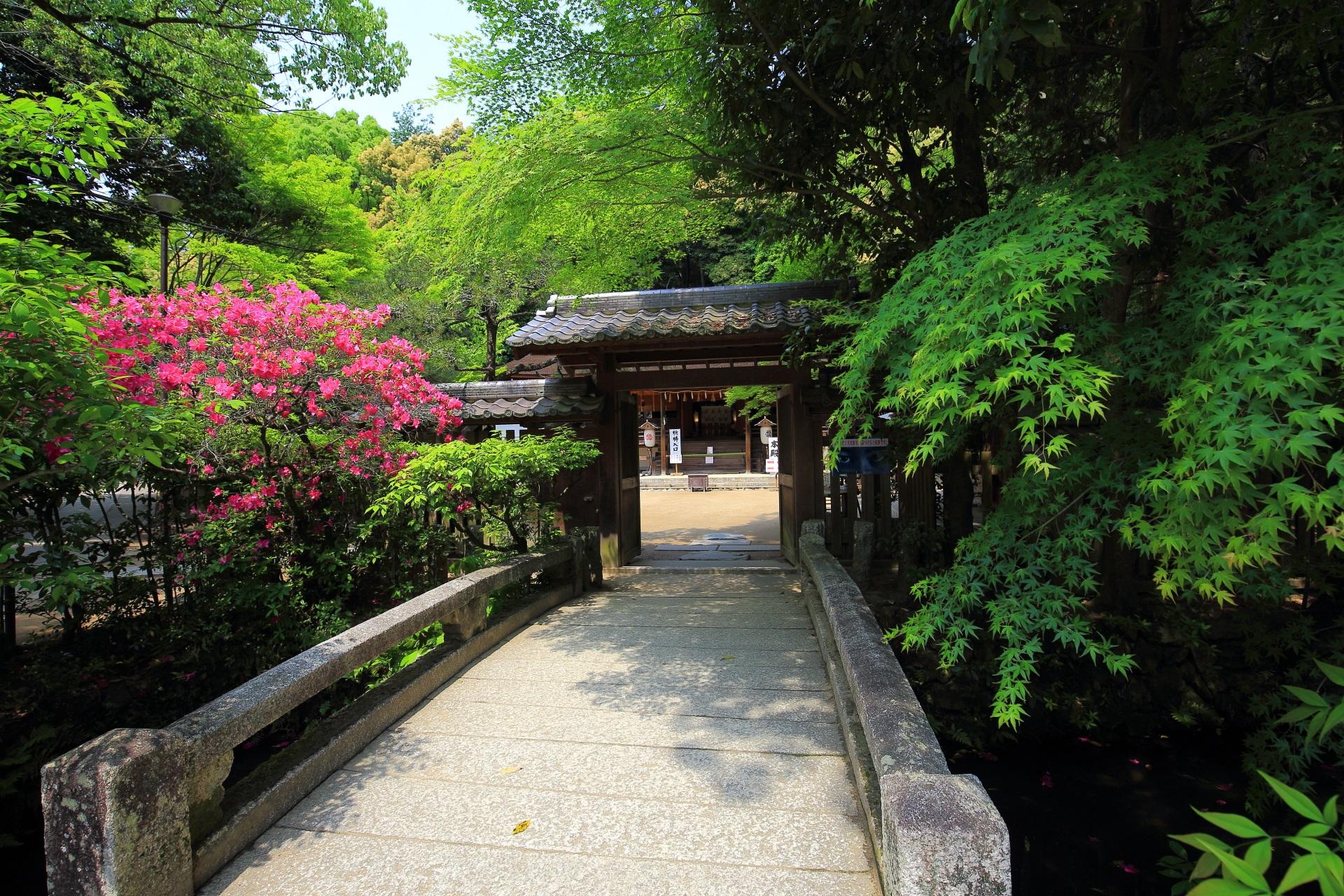 宇治上神社の参道の新緑と山門