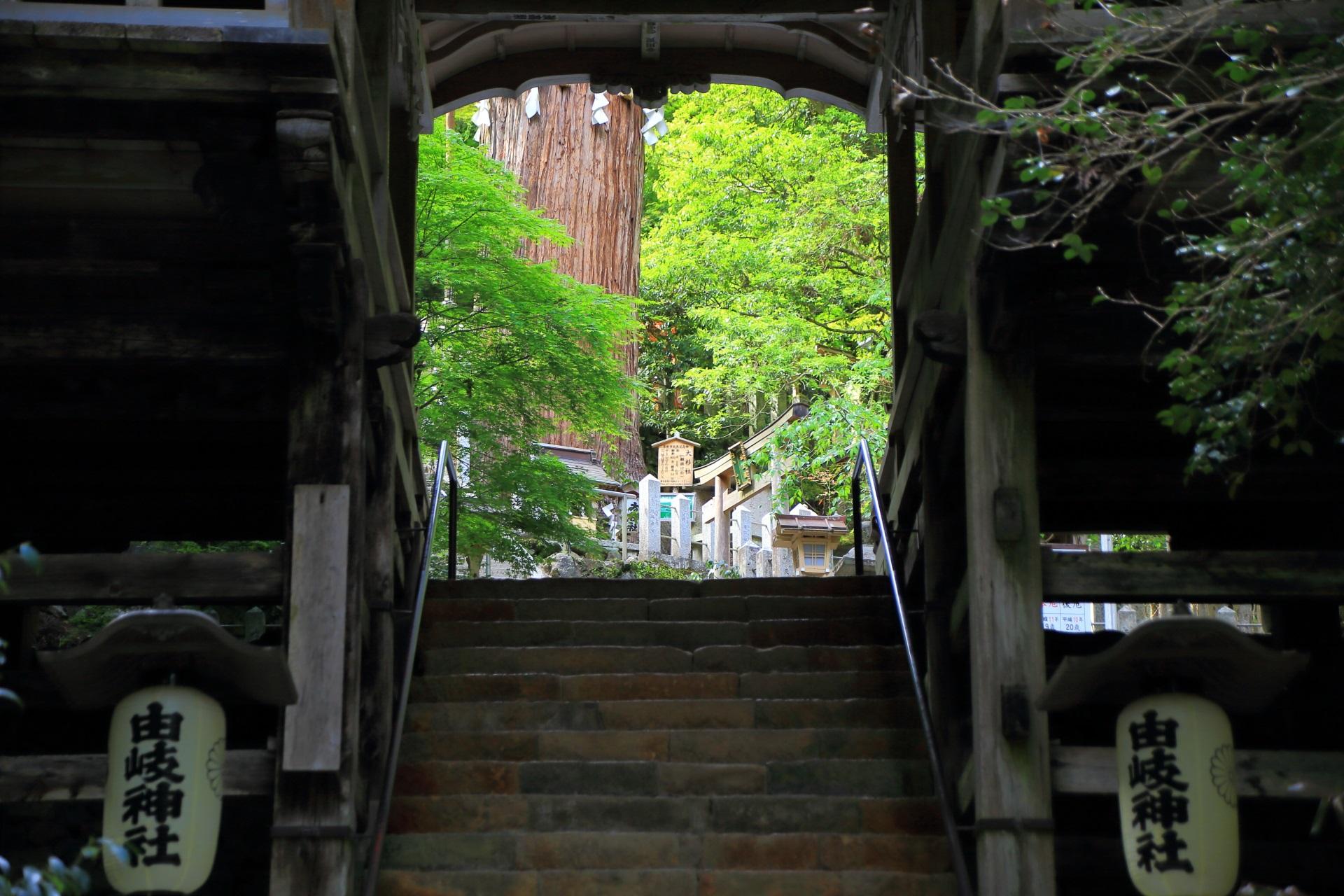 由岐神社の拝殿と大杉