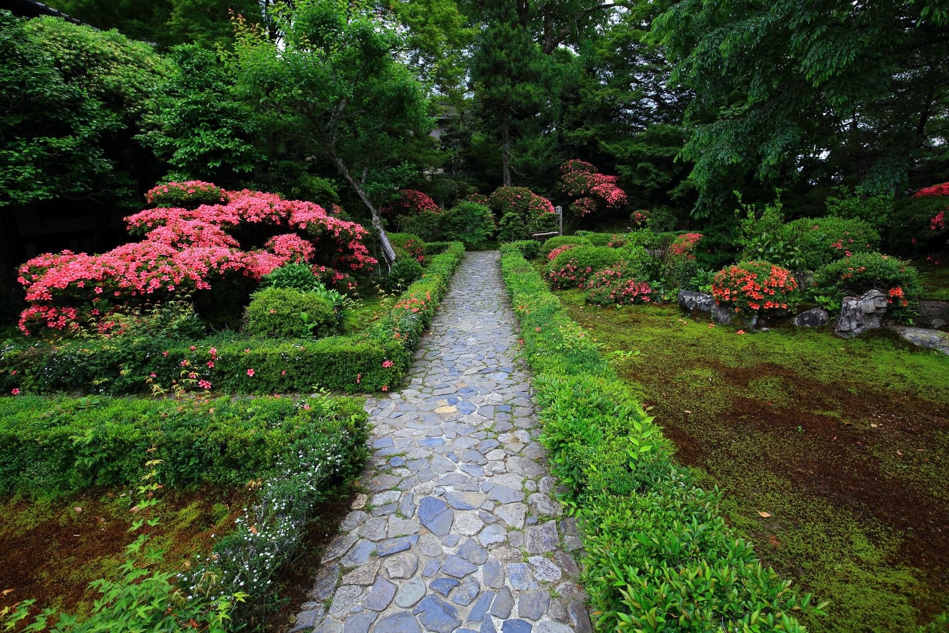 安楽寺の本堂側から眺めたサツキの咲く庭園