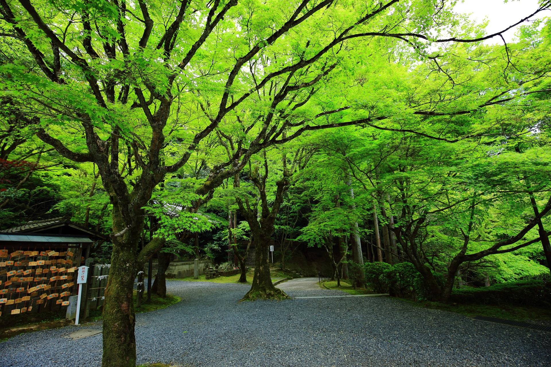 今熊野観音寺の鮮やかな青もみじ