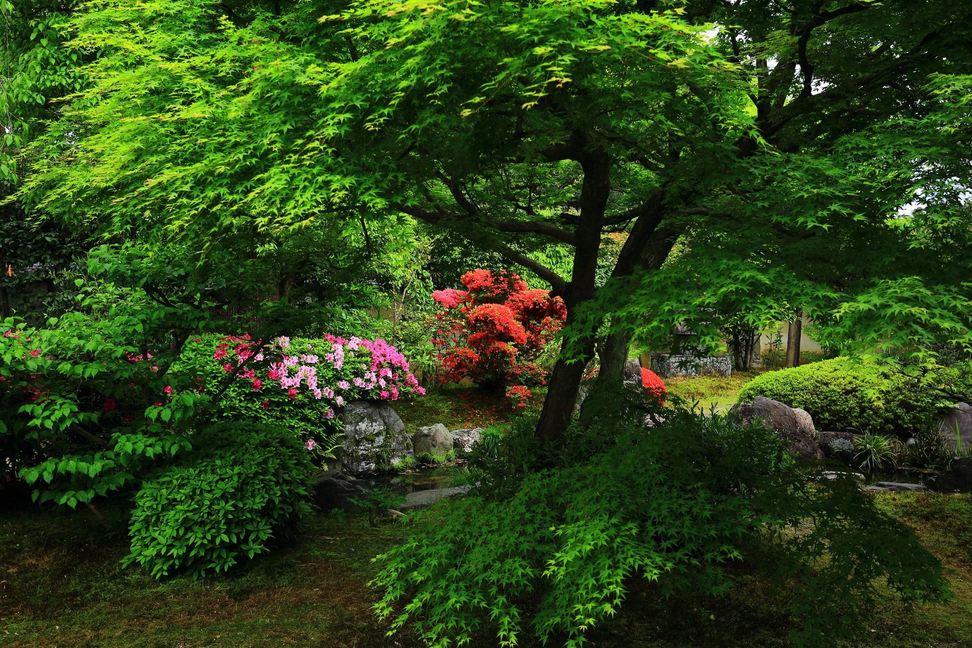 正伝永源院の方丈南側の眩い新緑と煌くツツジ