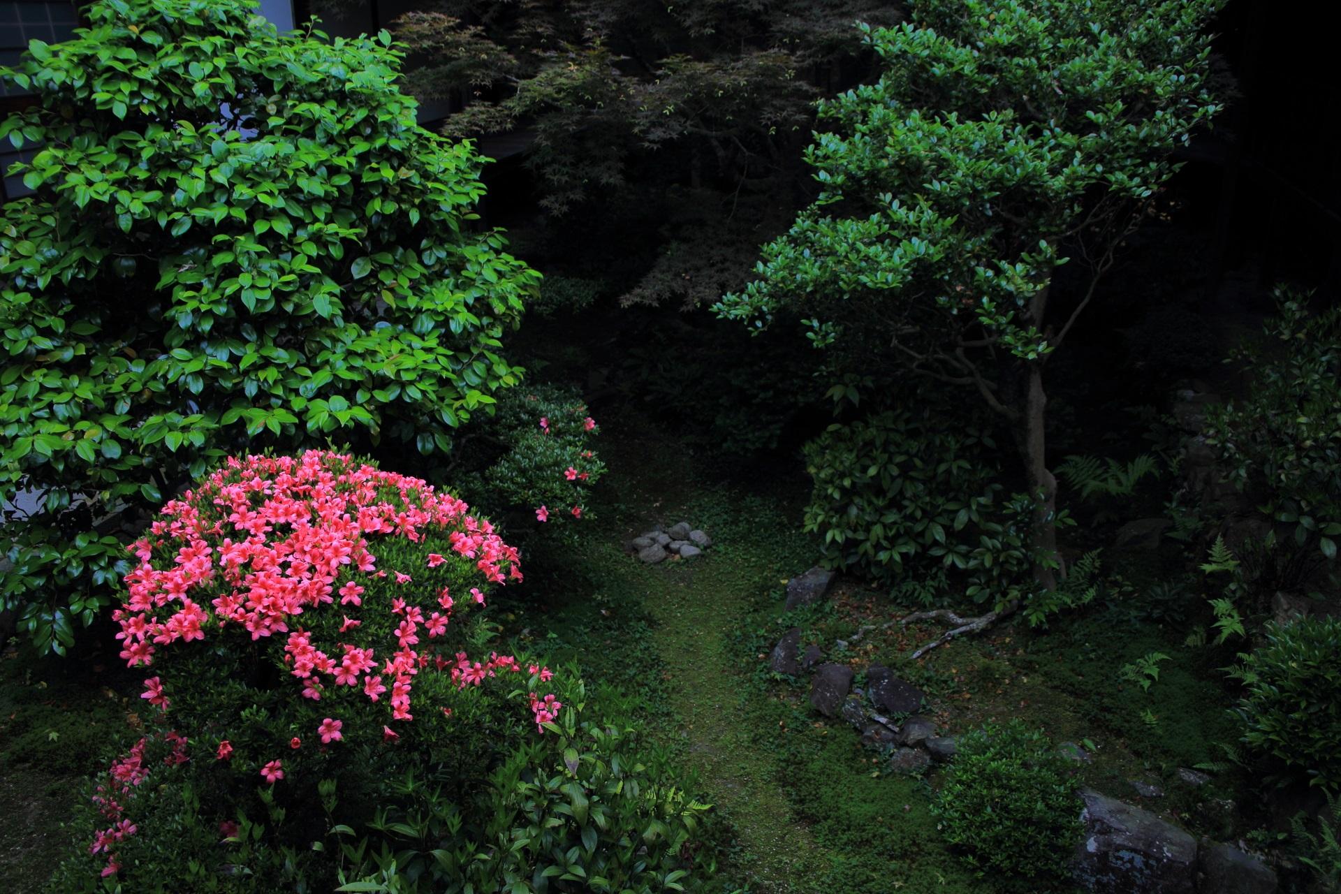 安楽寺の書院中庭の鮮やかに浮かび上がるサツキ