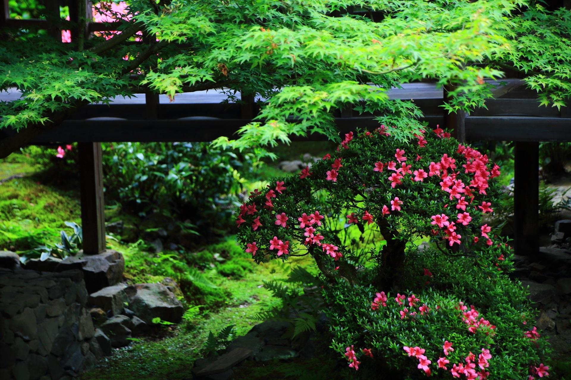 安楽寺の眩い青もみじや新緑とサツキの花