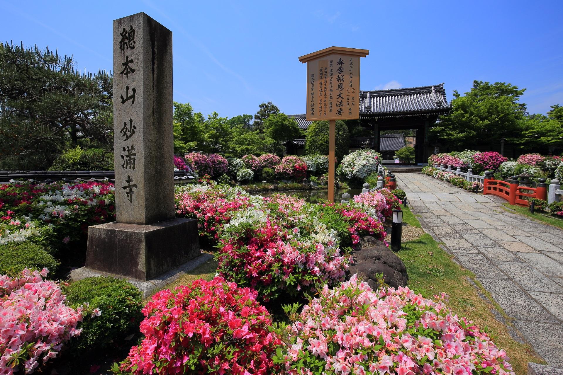 妙満寺の山門前の華やぐツツジ