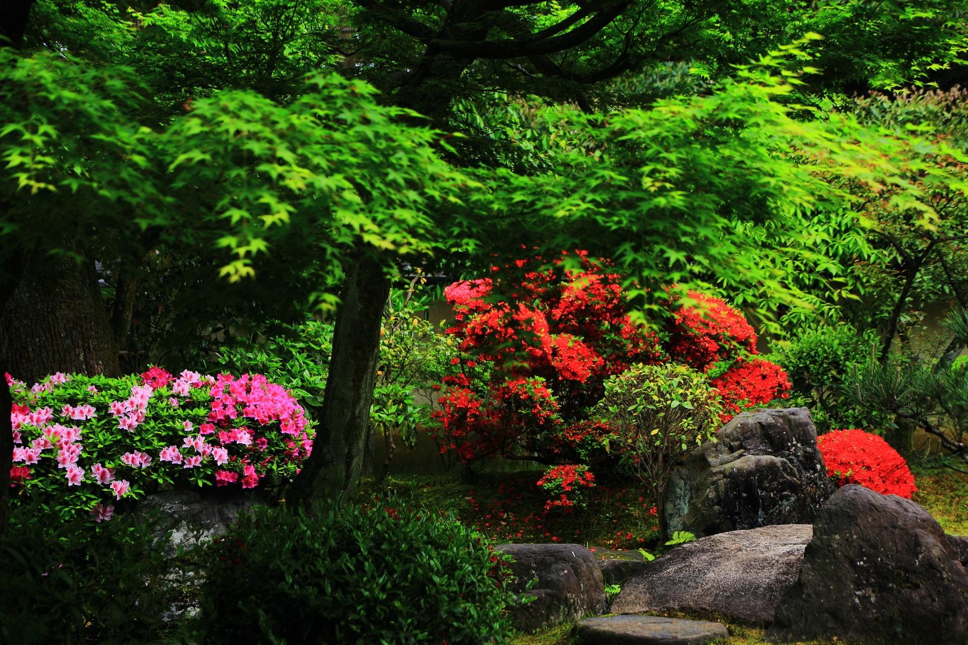 正伝永源院の春の鮮やかで鮮烈な色合い