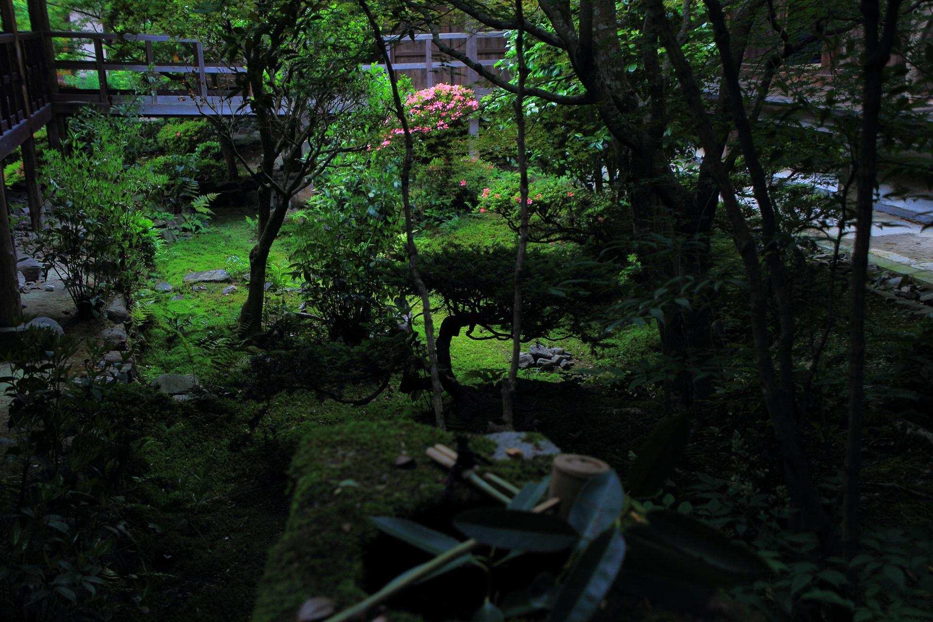 安楽寺の風情ある落ち着いた中庭で輝くサツキ