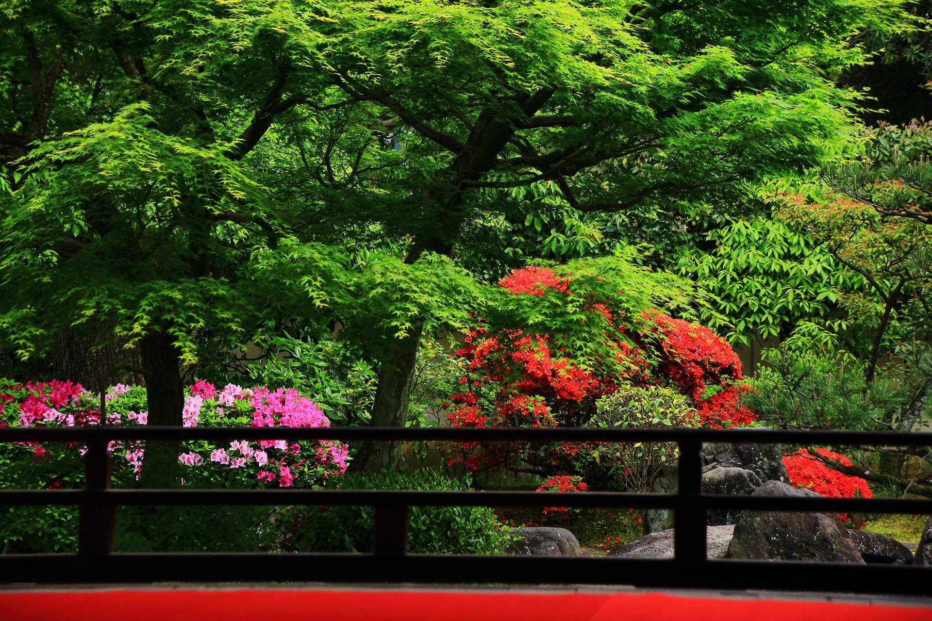 正伝永源院 つつじと新緑 赤と緑の春の彩り