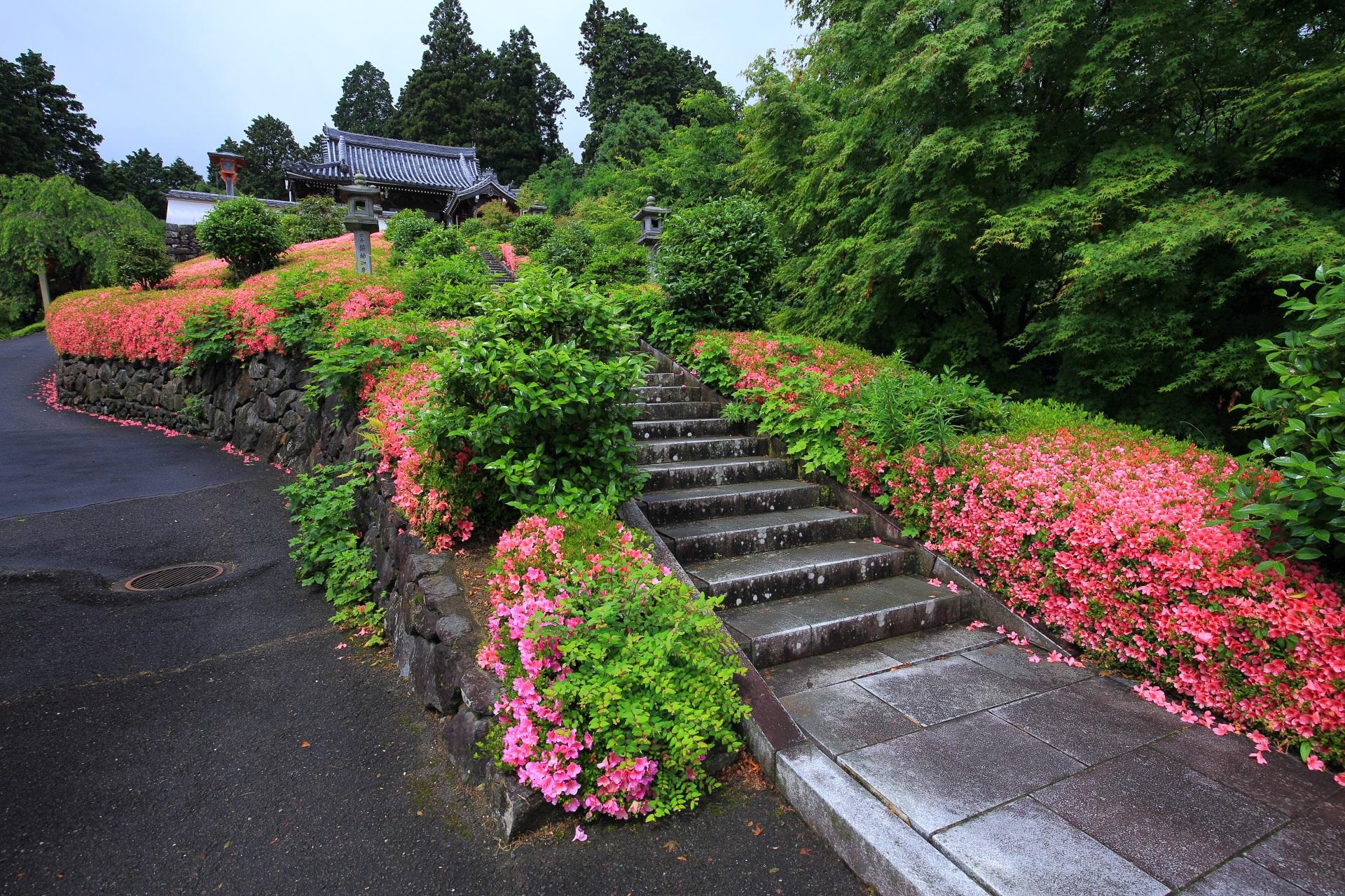 緑がピンクで染まる善峯寺の薬師堂