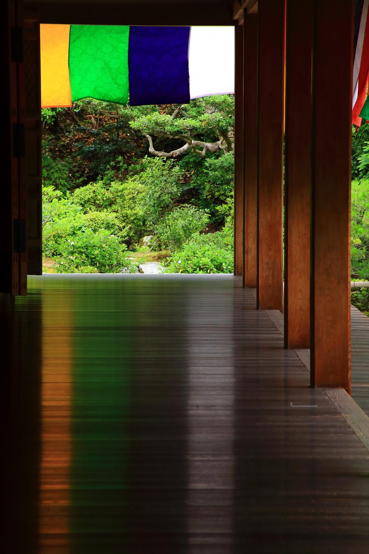 講堂から眺めた緑と美しい床