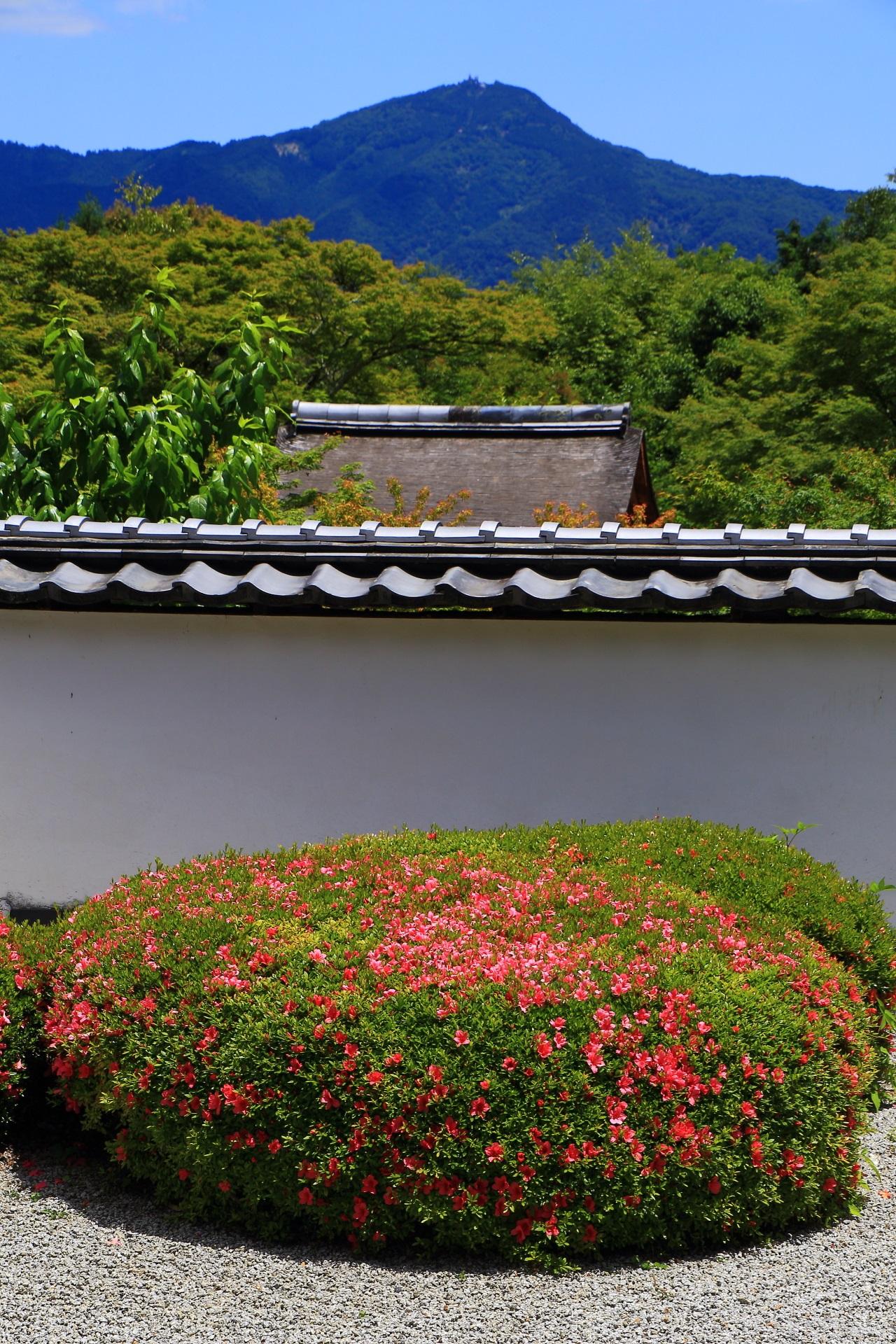 正伝寺の見事な借景庭園の比叡山とサツキ