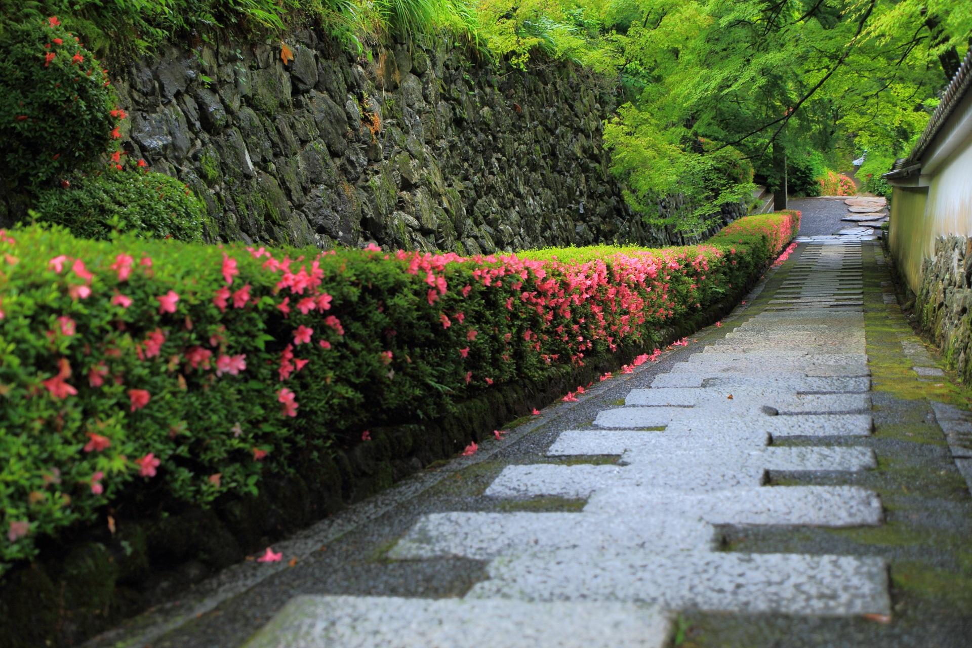 いろんな見方ができる石垣や青もみじが演出する長い参道のサツキ