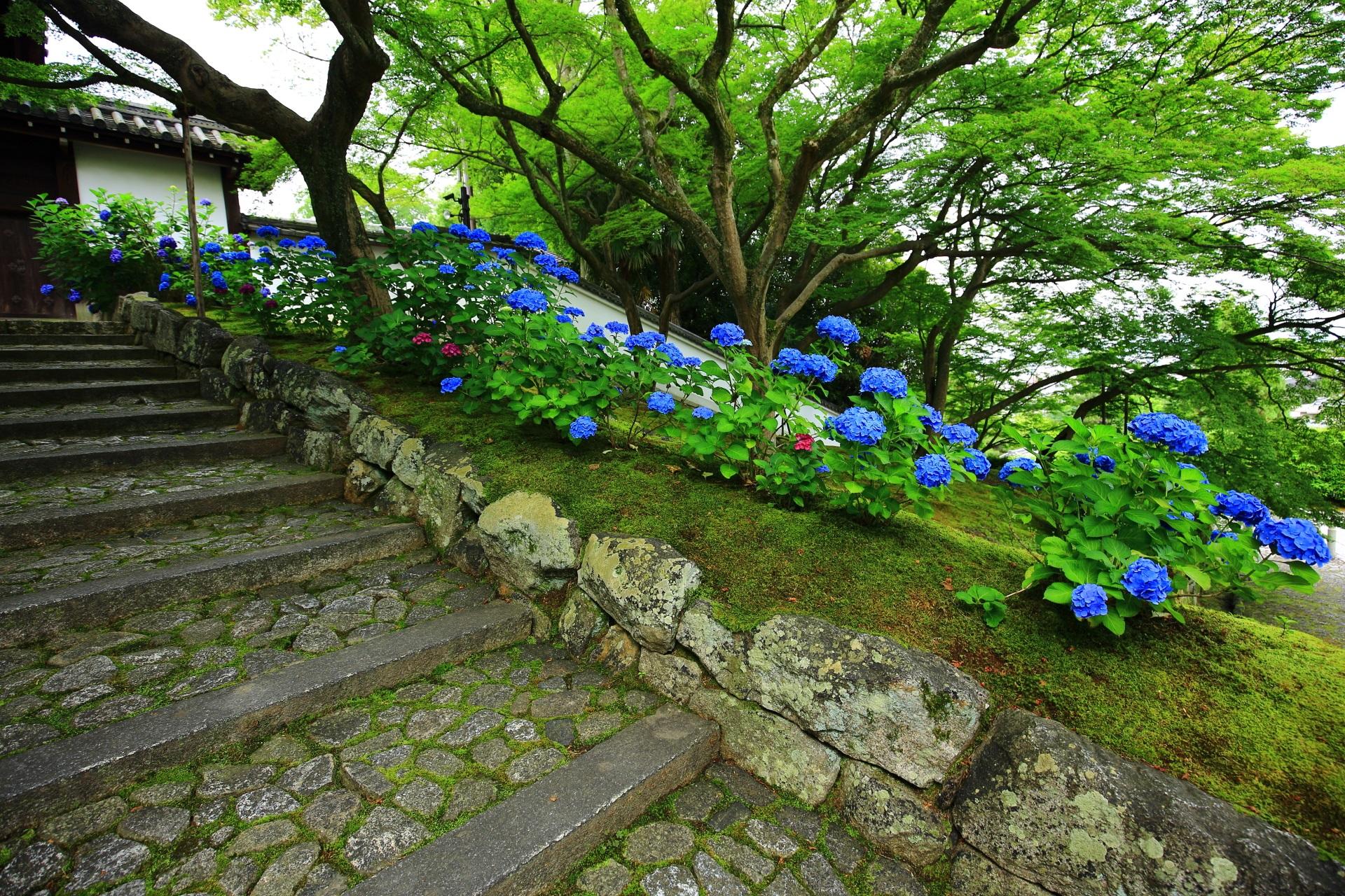 黒門坂のU字の中に植えられるもみじや苔や紫陽花