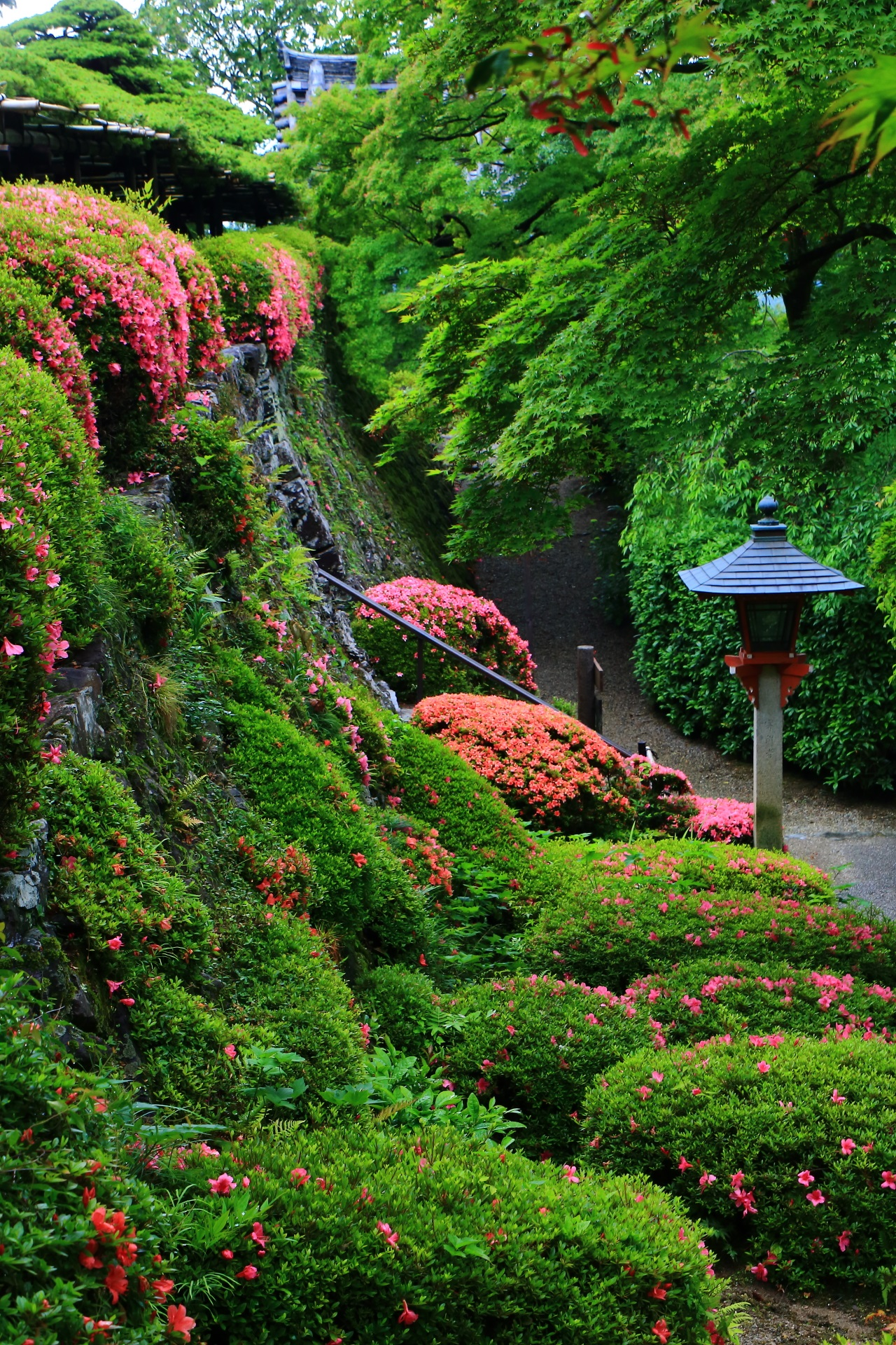 Kyoto Yoshimine-dera Temple azalea and fresh green