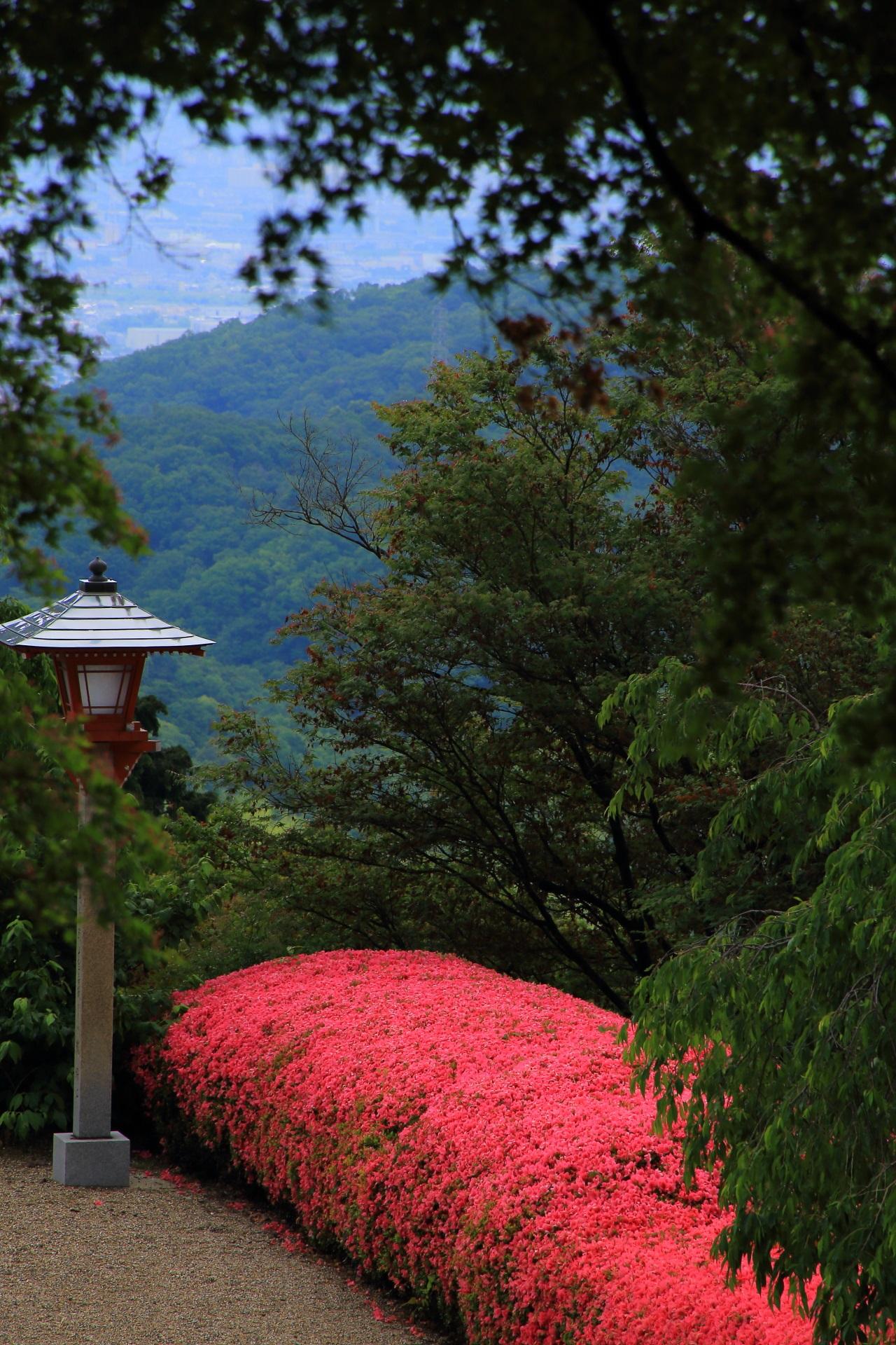 どこから見ても凄い緑の中で優雅に咲く善峯寺のサツキ