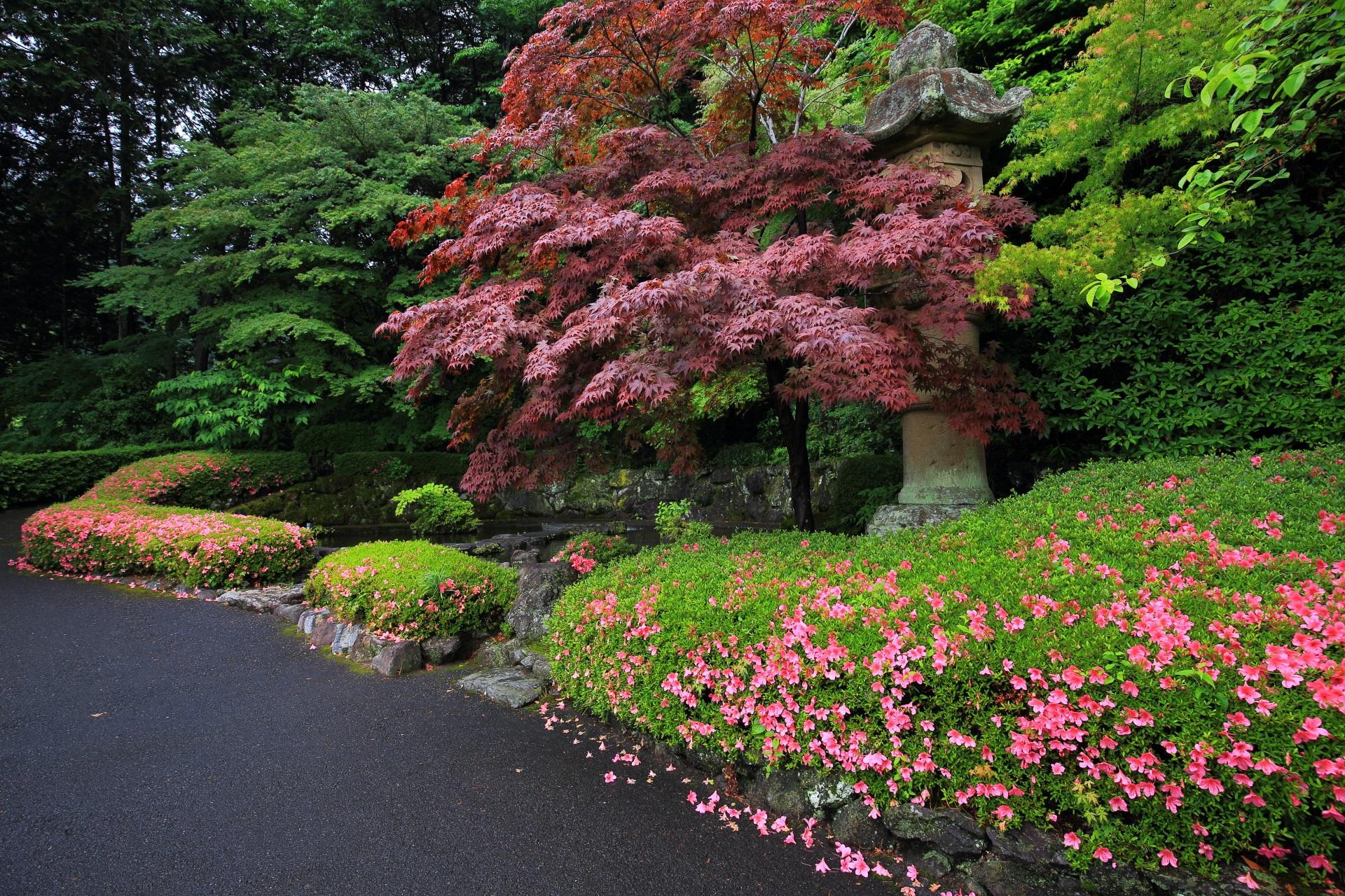 善峯寺の青蓮の滝のサツキと新緑