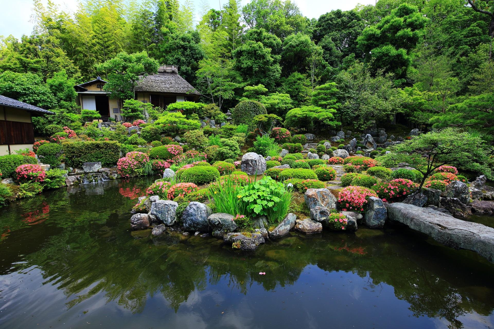 美しい緑の中で咲き誇る華やかなサツキ