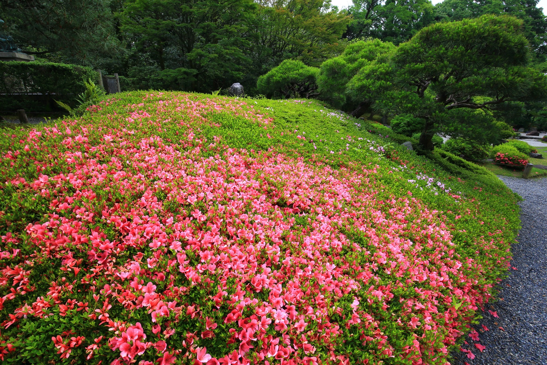 Kyoto Chion-in Temple Yuzen-en Garden azalea