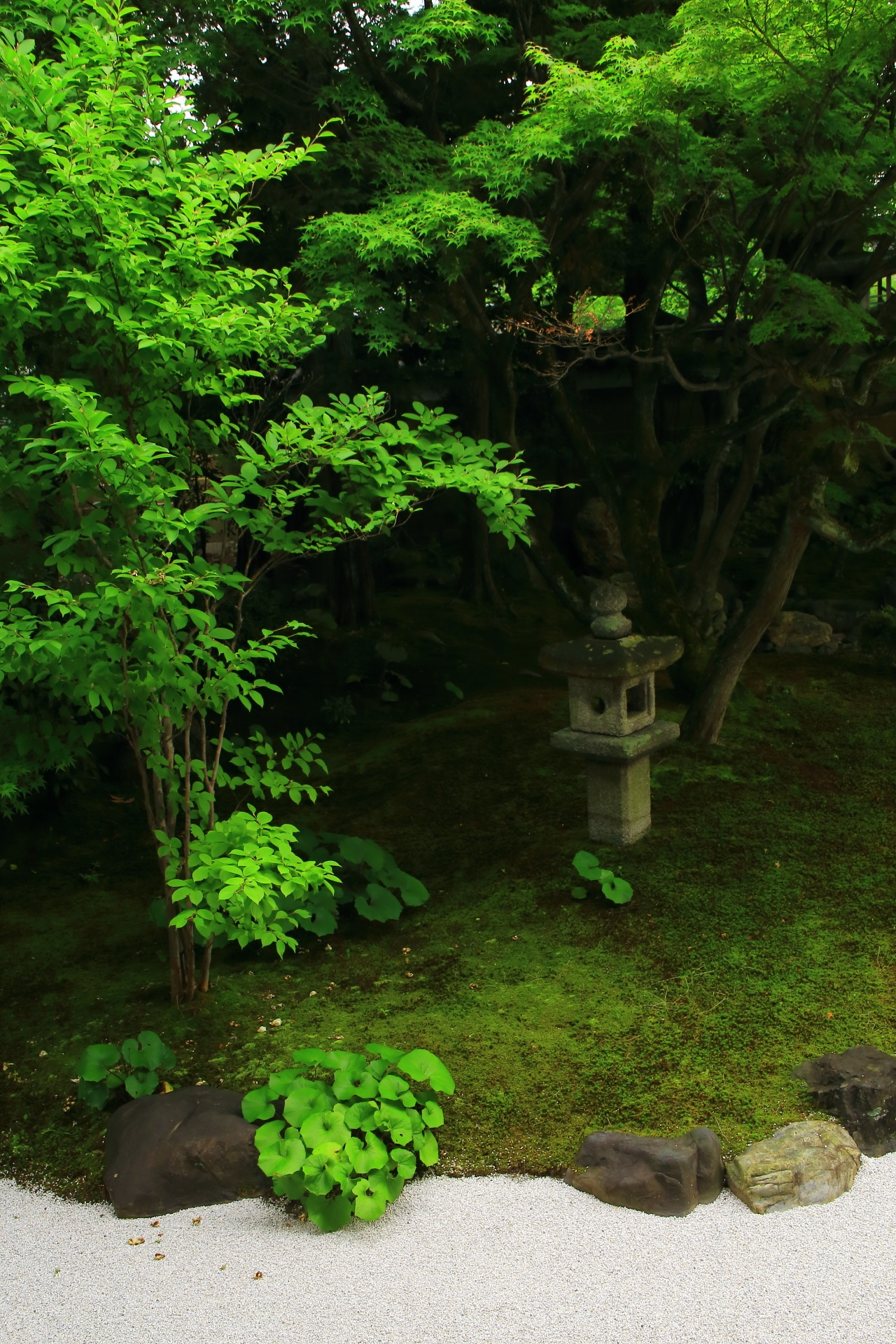 A garden named Shikai-Shodo-no-niwa of green and white sand of Myoken-ji Temple in Kyoto,Japan