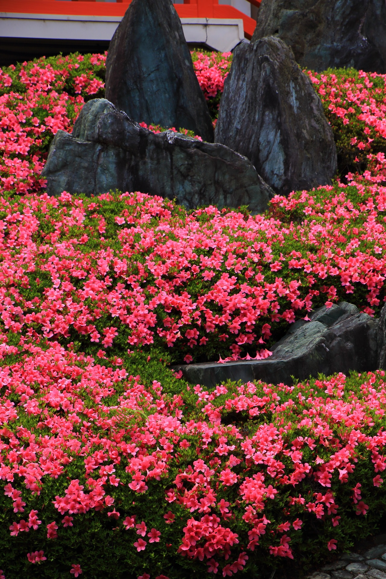 Kyoto Matsunoo-taisya Shrine azalea