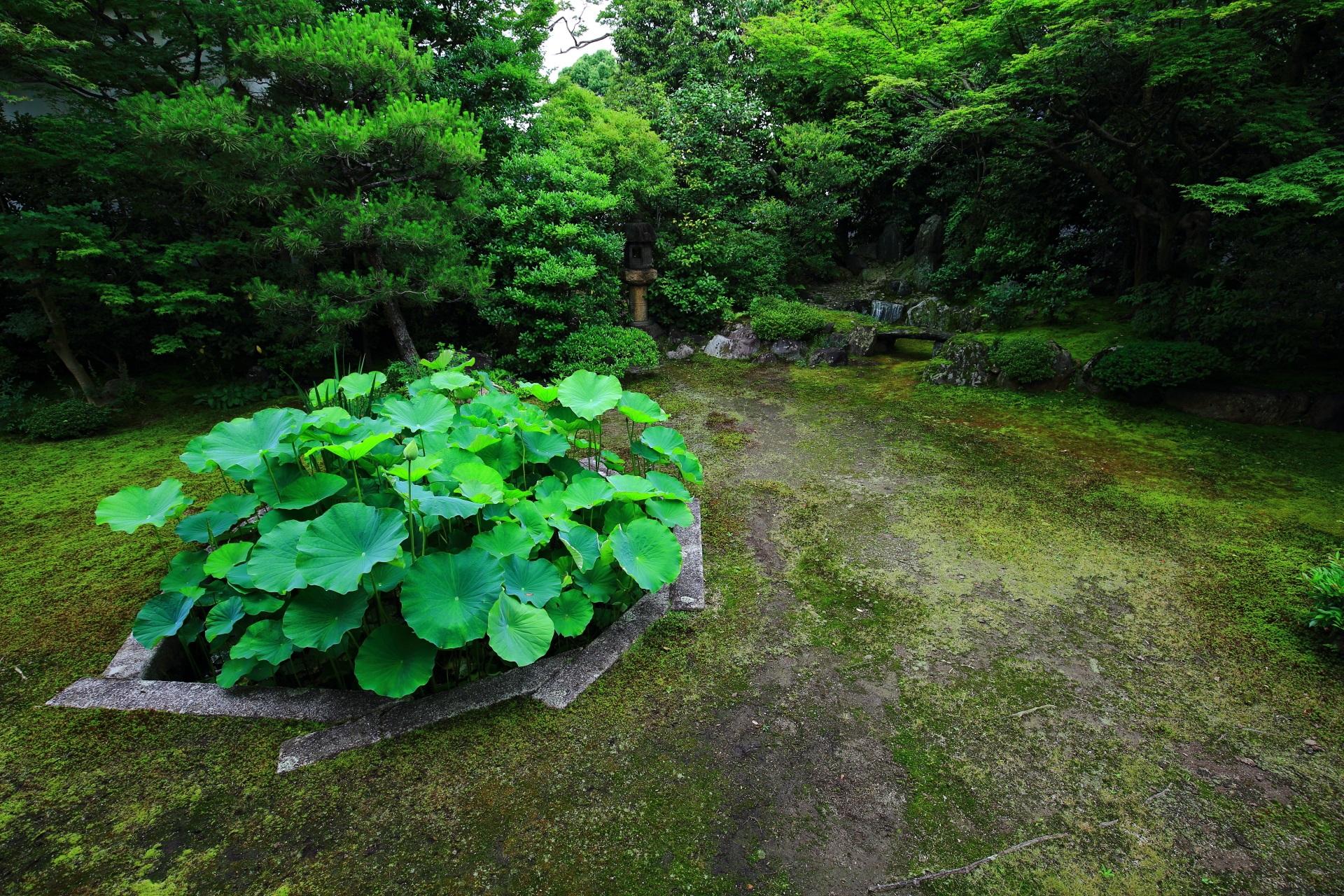 本法寺の十角形の蓮池と巴の築山