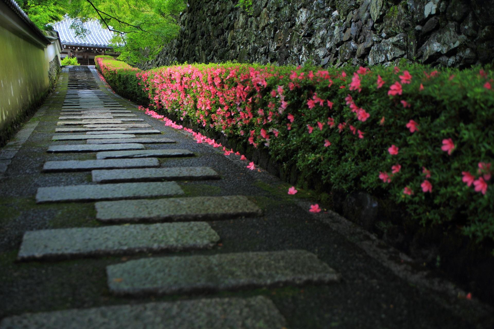 善峯寺の素晴らしすぎる一生もんのサツキと情景
