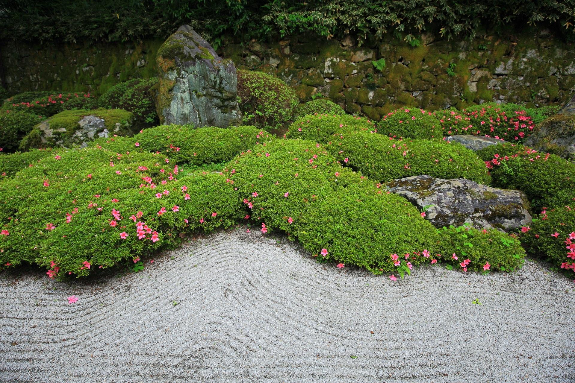 パラパラ咲きの品種の二十五菩薩の庭のサツキ
