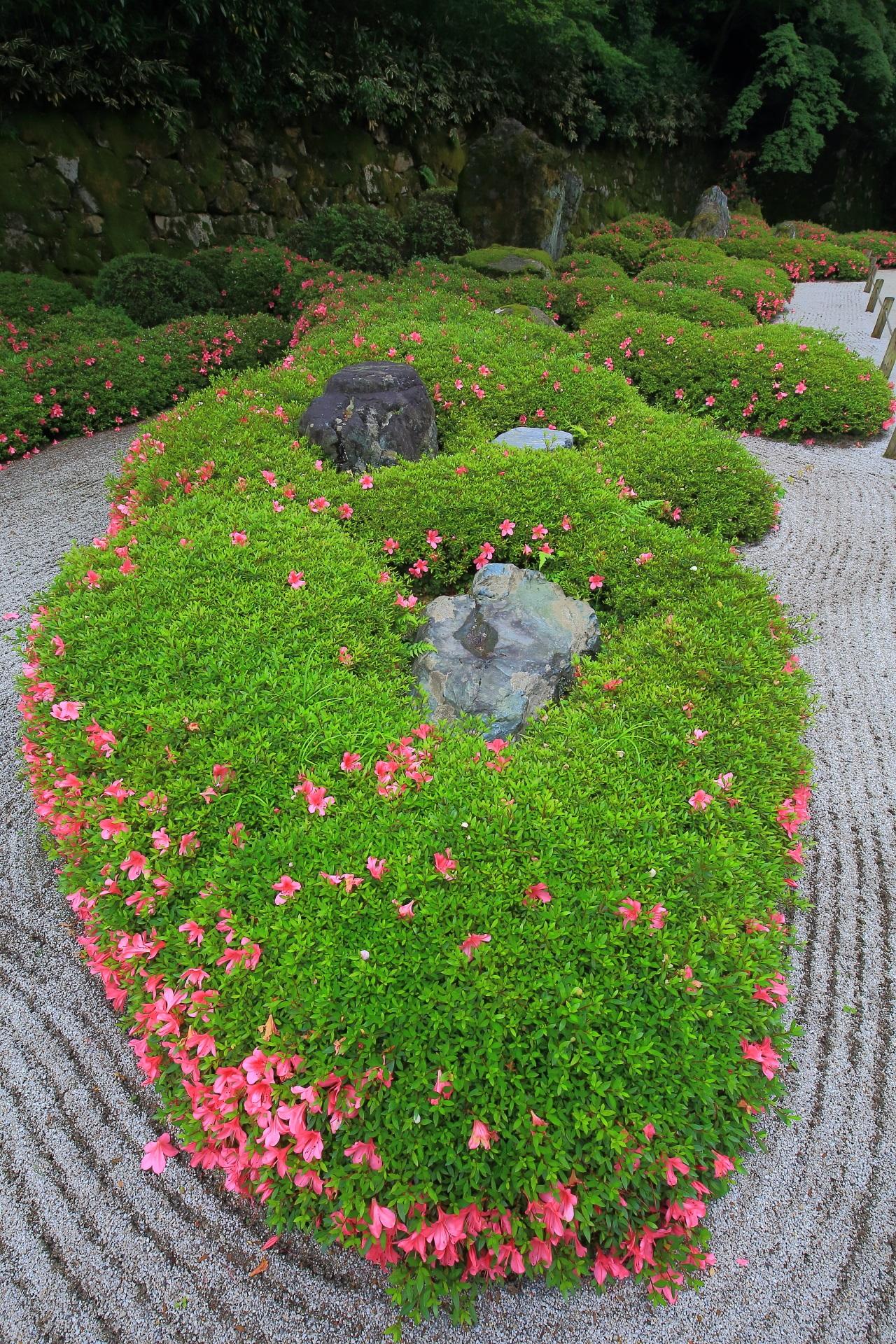知恩院方丈庭園の素晴らしいサツキと春の情景