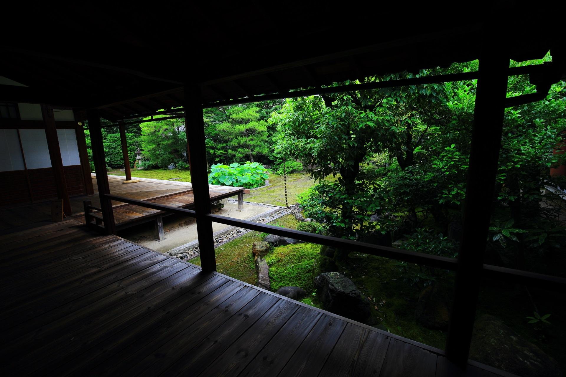 本法寺の風情ある回廊から眺めた巴の庭