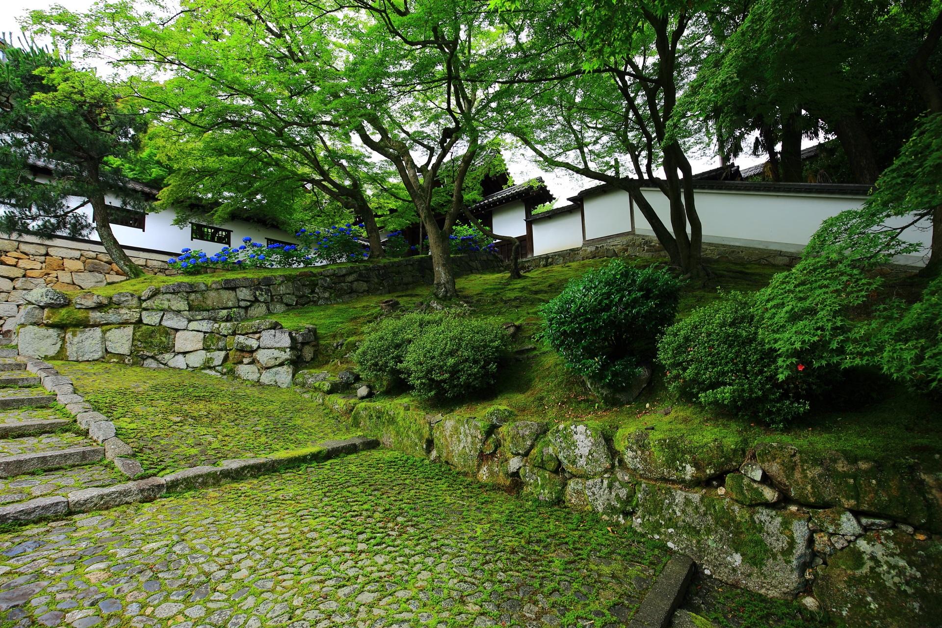 白壁と石垣に映える美しい苔と紫陽花の素晴らしい初夏の情景