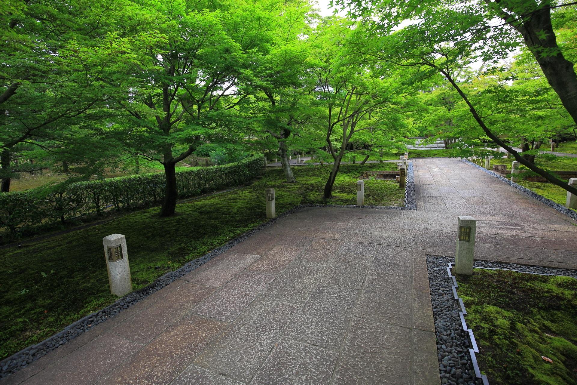深く鮮やかな緑につつまれた智積院