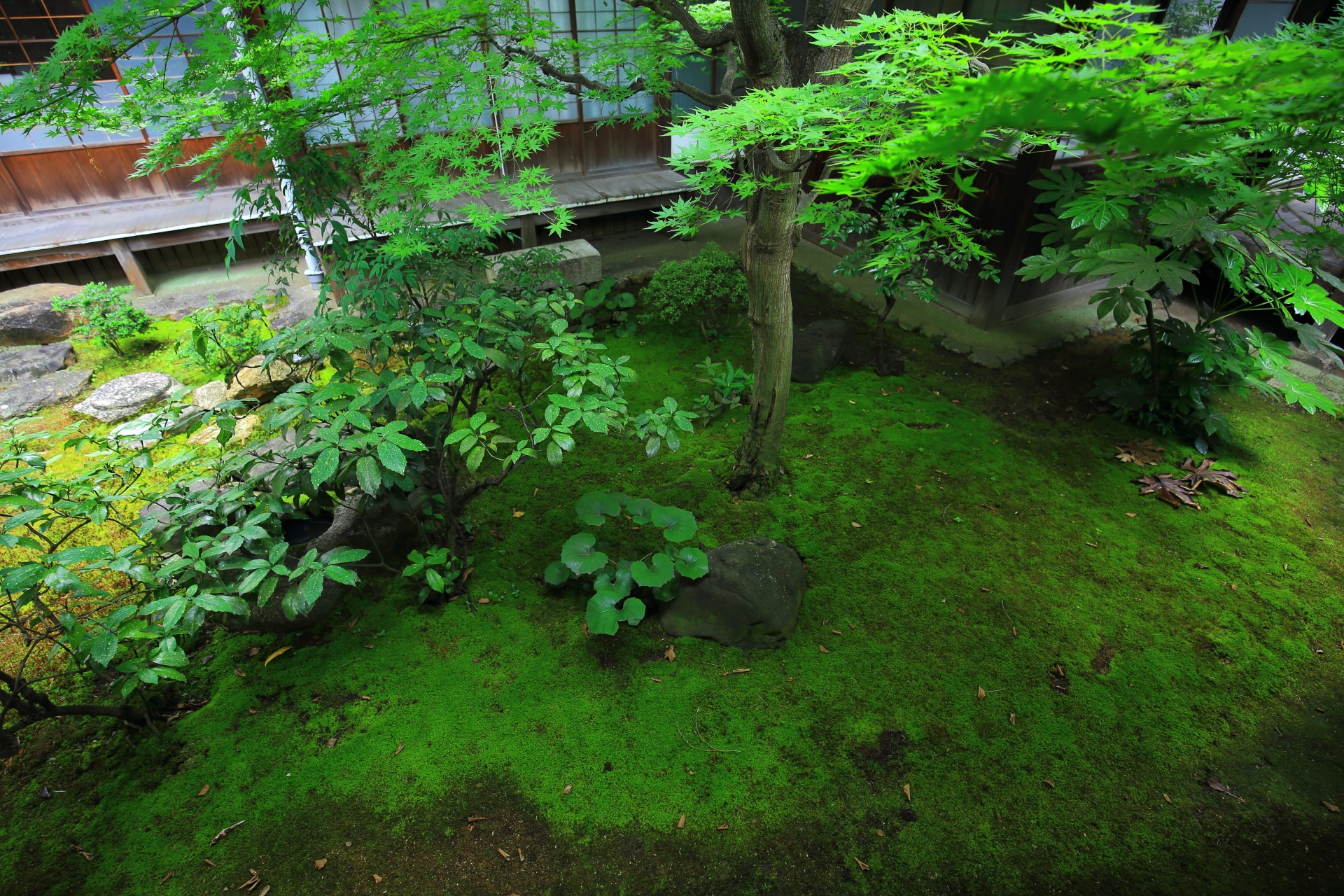 Beautiful green garden of Honpoji-Temple in Kyoto