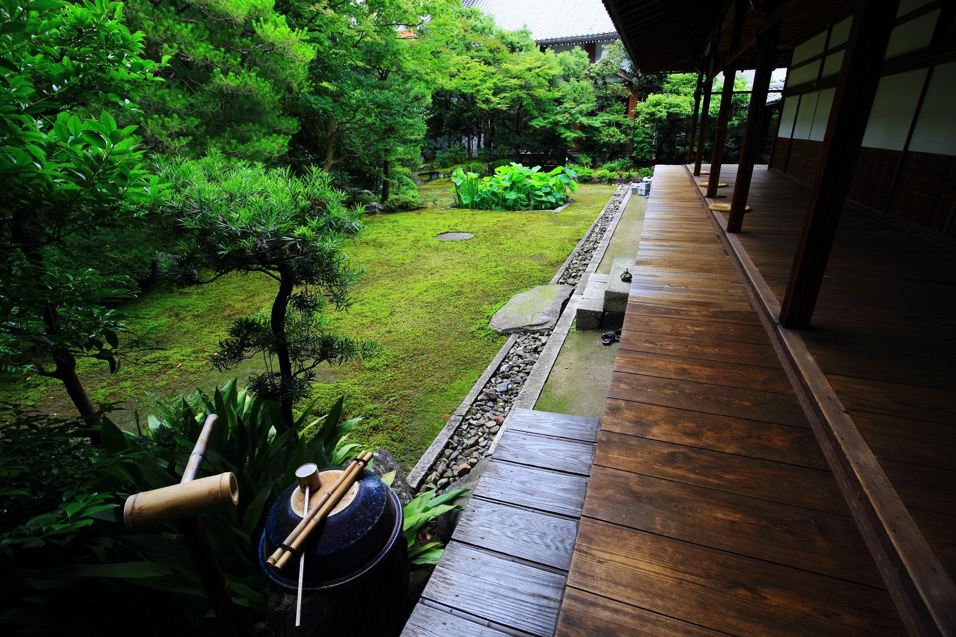 素晴らしい本法寺の巴の庭