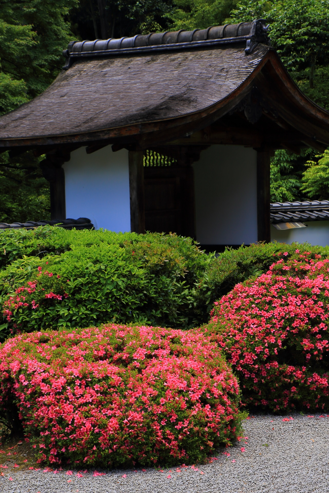 Azalea Shoden-ji Temple in Kyoto,Japan