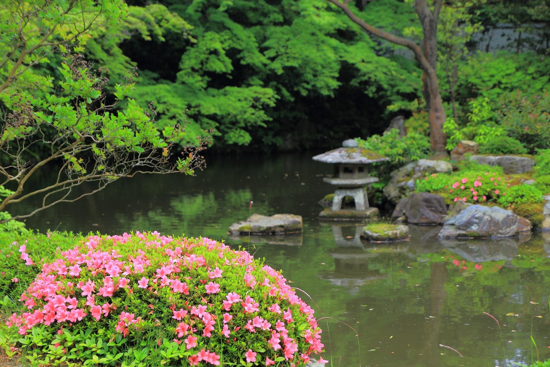 サツキが華やかに咲く大方丈前の庭園