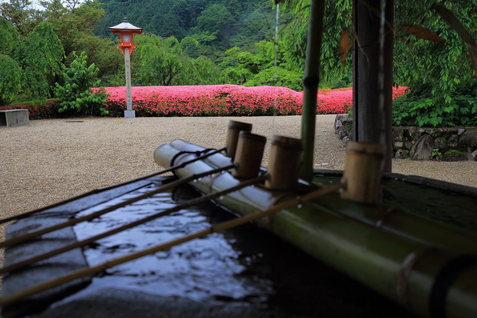 善峯寺の風情ある手水舎とサツキの情景