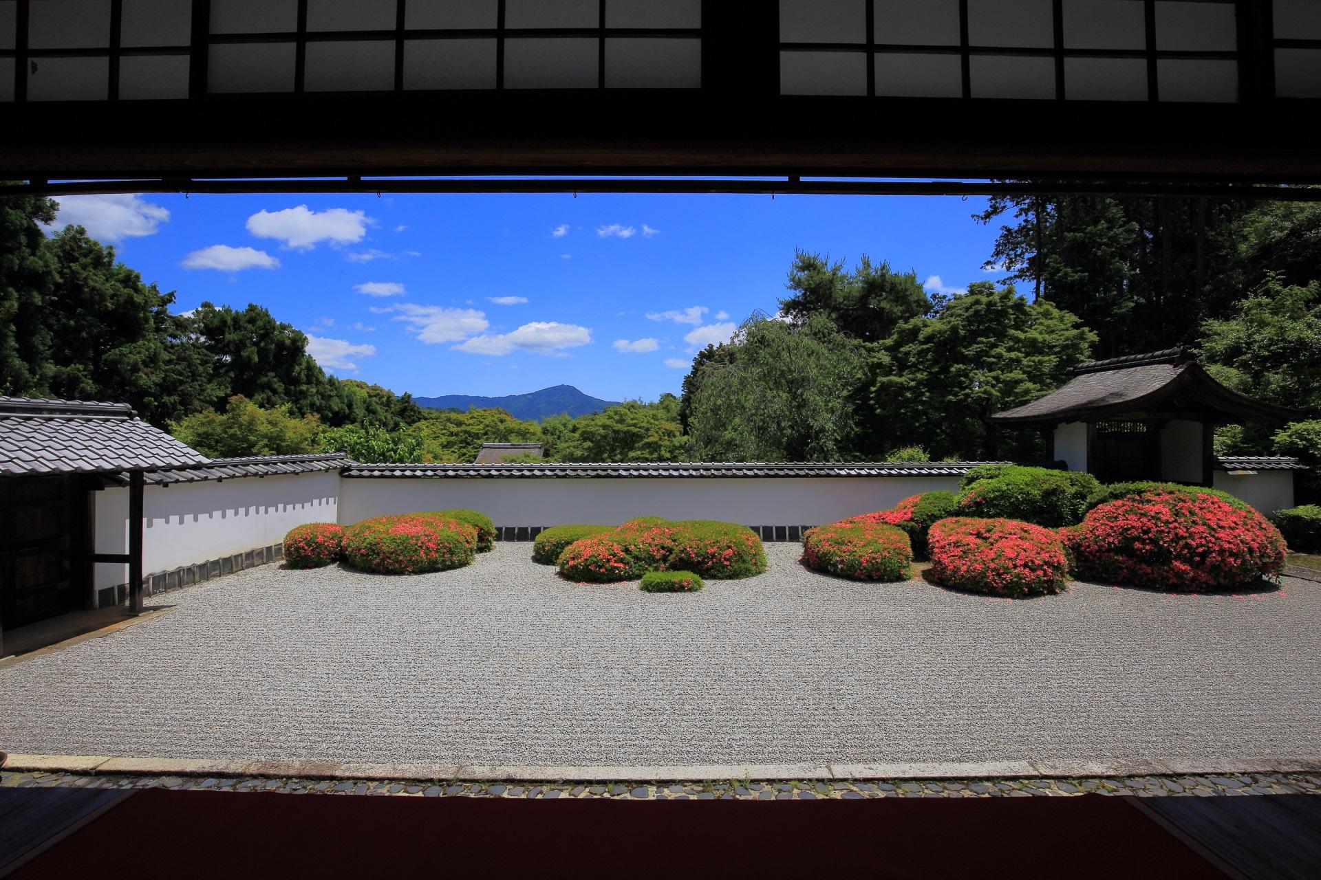 青い空と白い雲が演出する正伝寺の美しいサツキの庭園