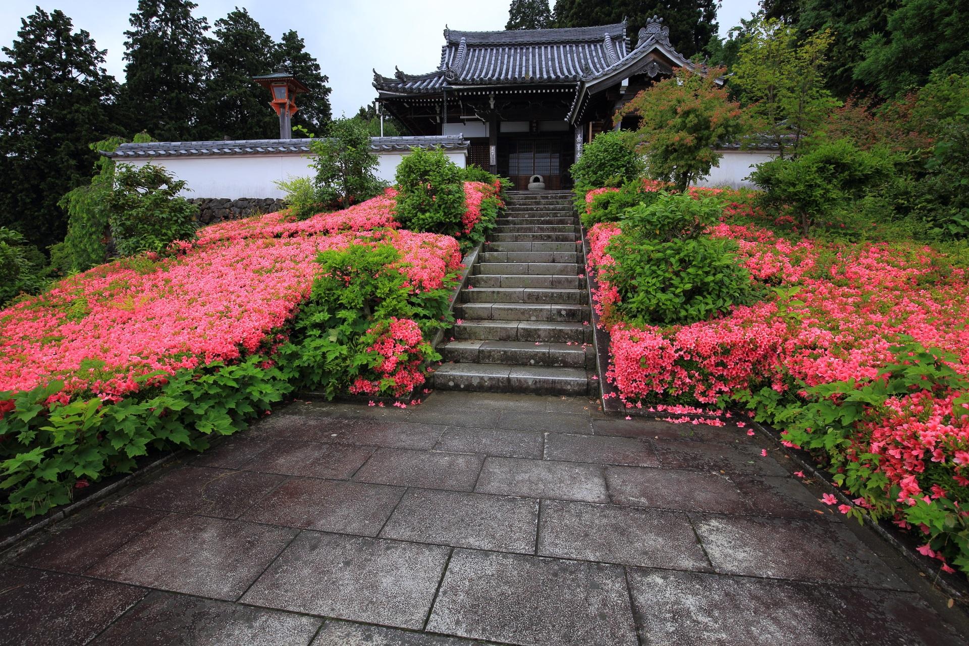 華やかなピンクにつつまれた薬師堂と風情ある石段と石畳
