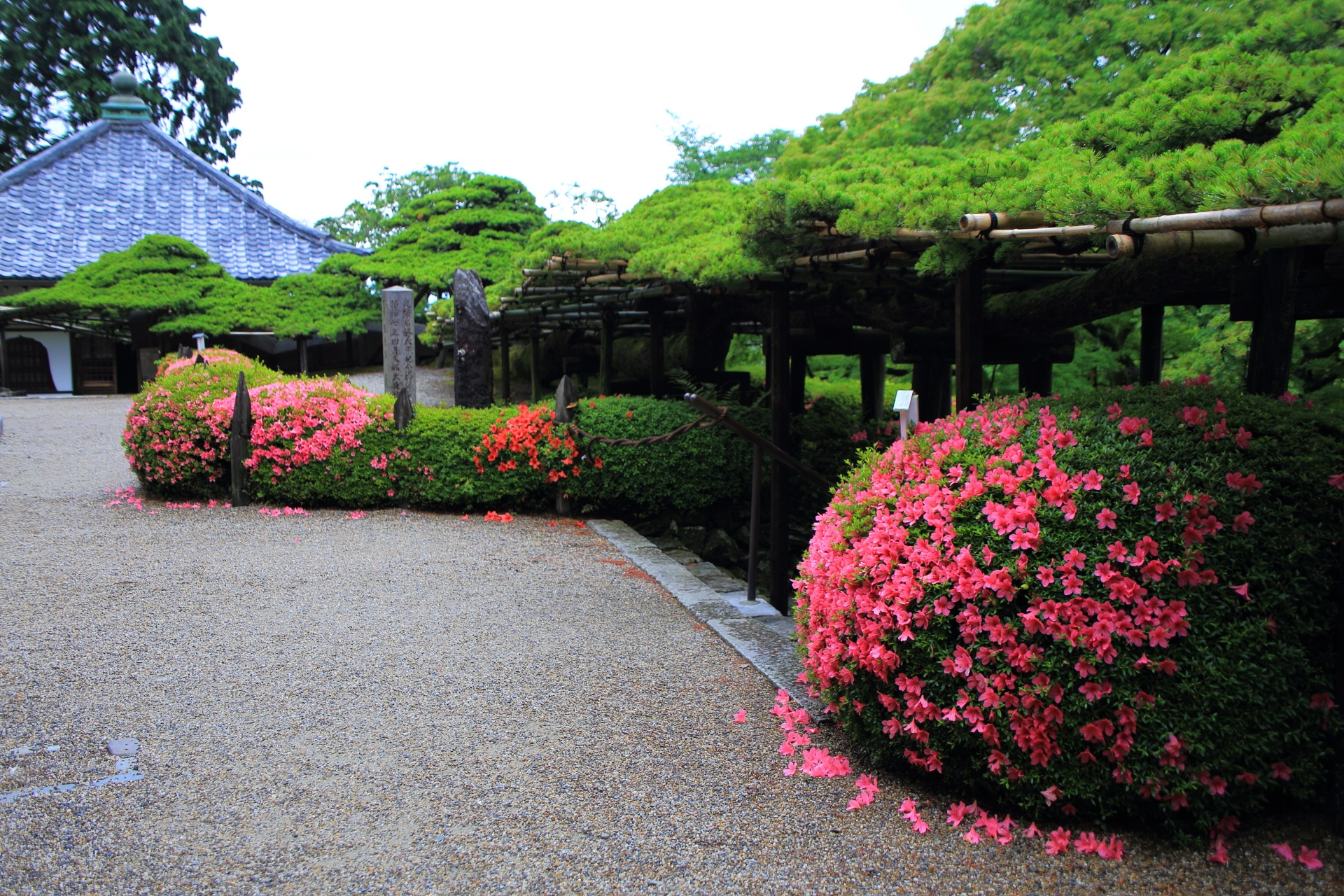 護摩堂と優雅なサツキに彩られた遊龍の松
