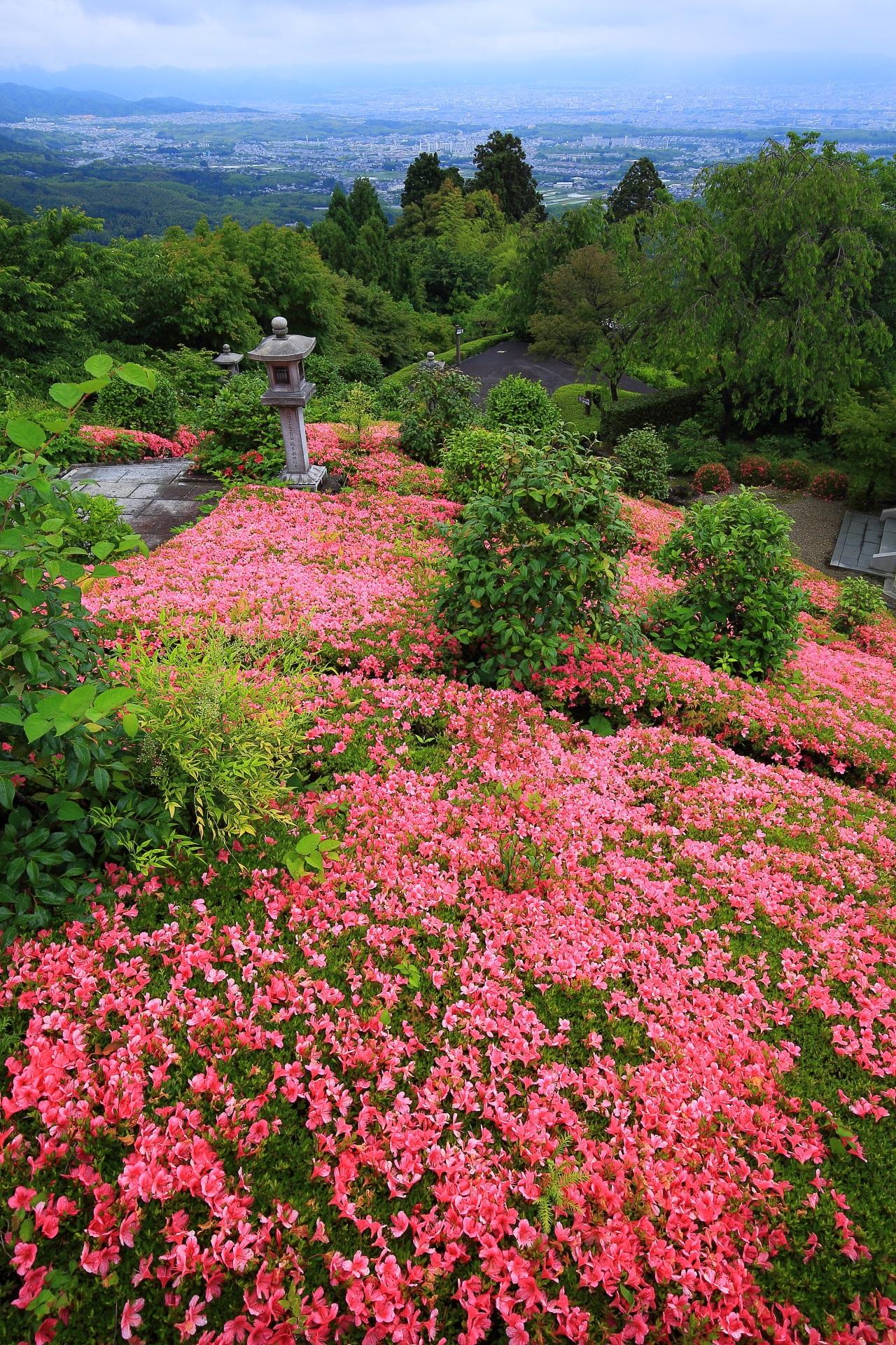 善峯寺の素晴らしい満開のサツキと春の情景
