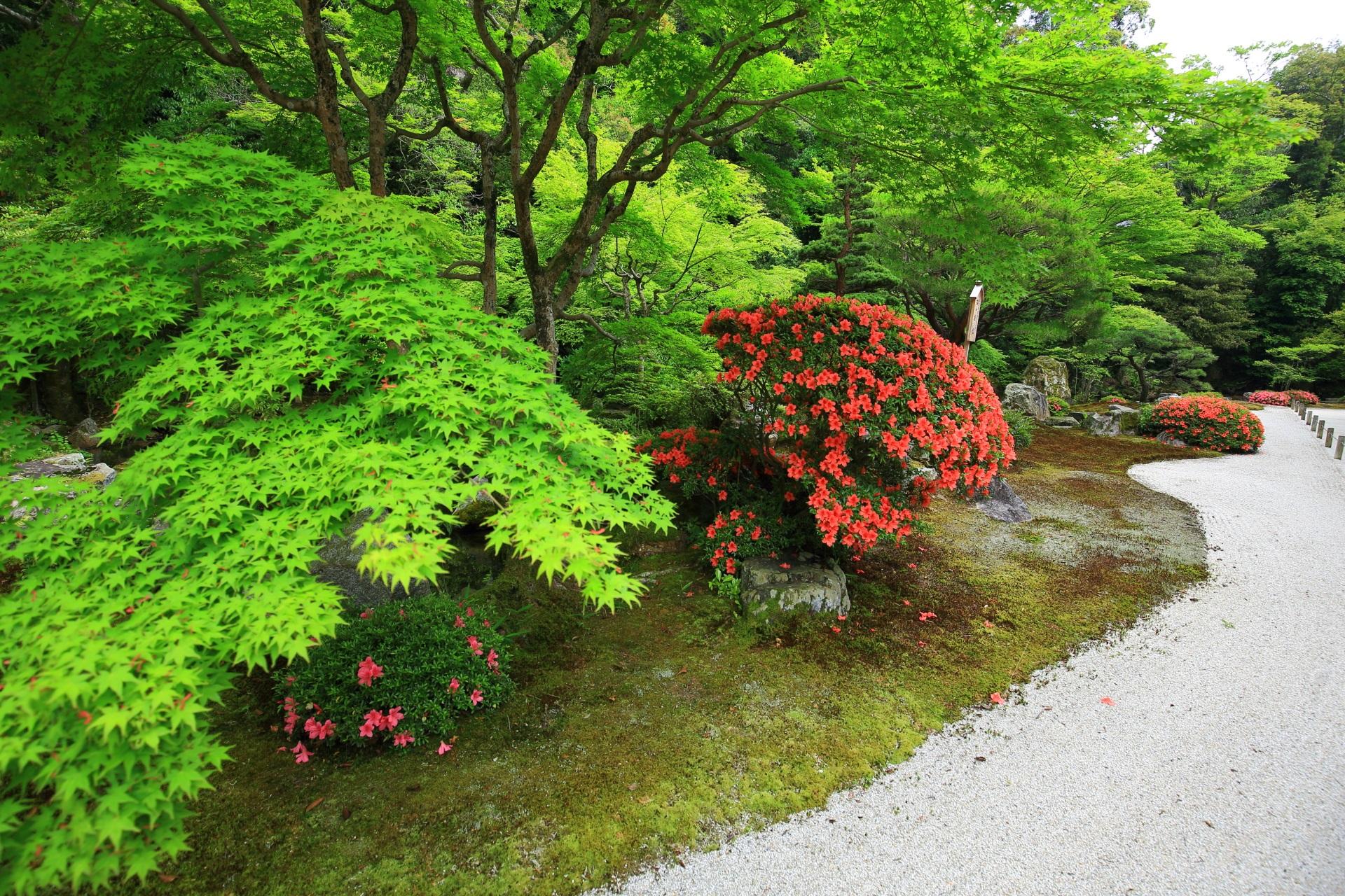 鮮やかで美しい新緑とサツキの花と素晴らしい色合いの白砂