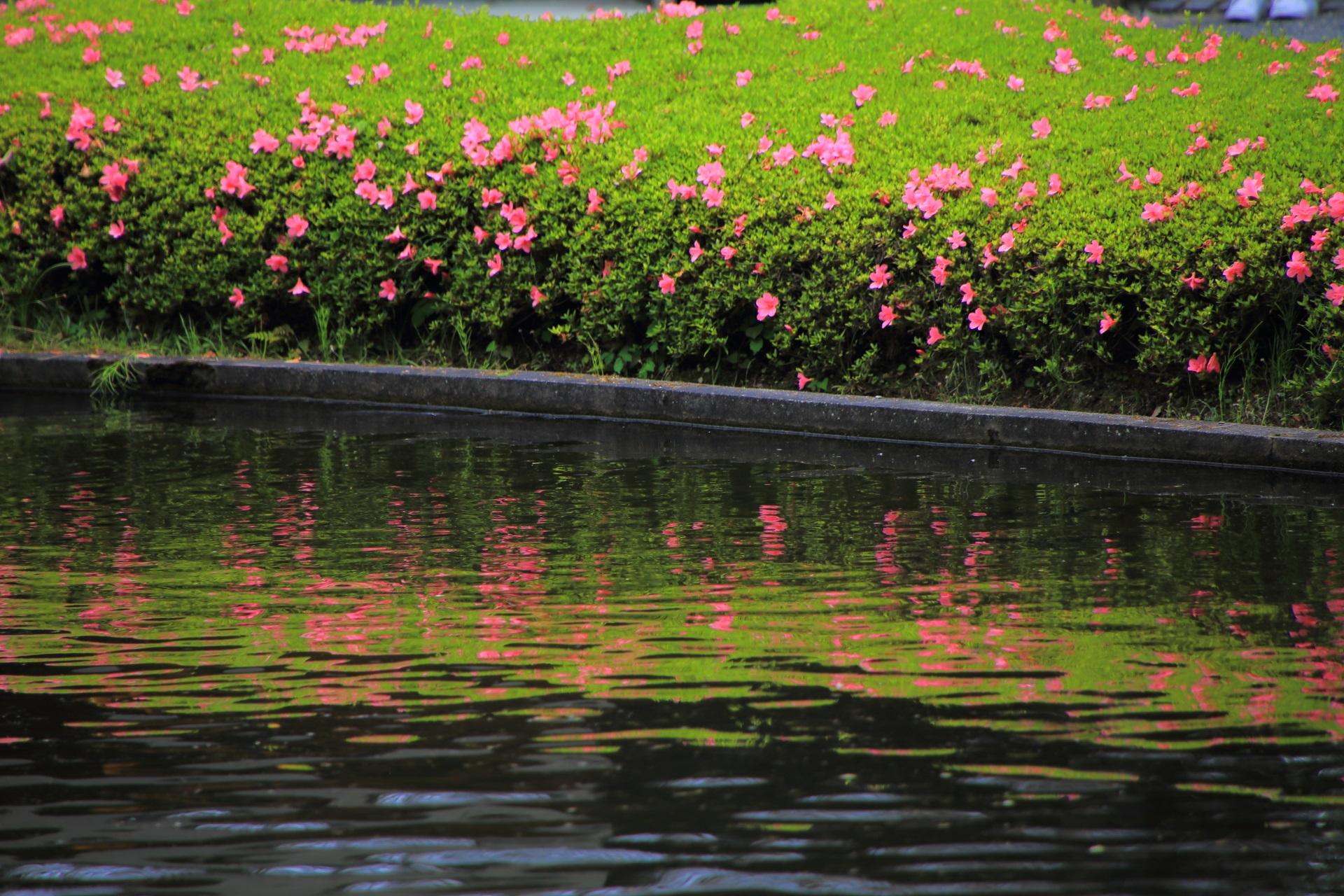 松尾大社の蓬莱の庭の美しいサツキの水鏡