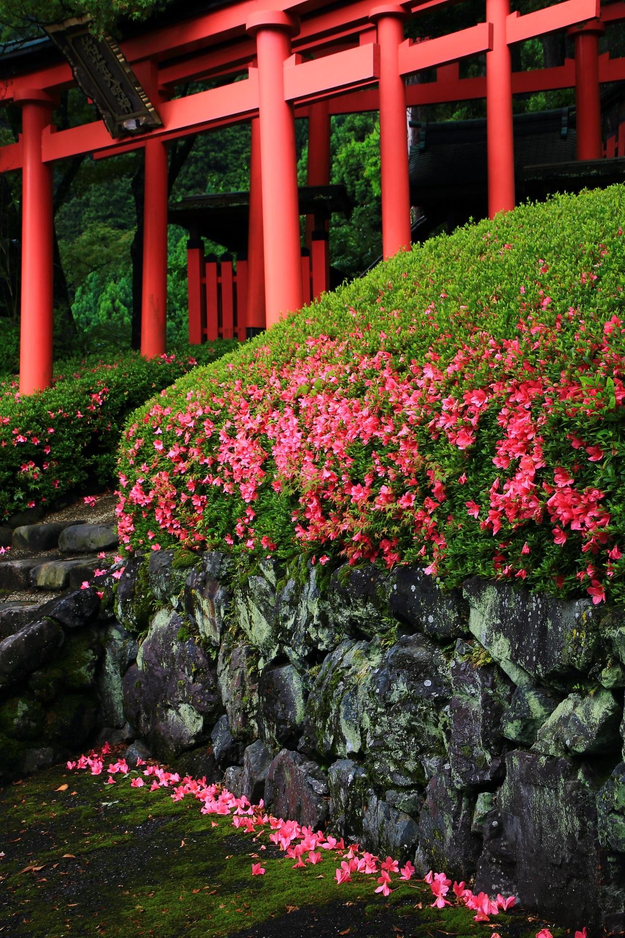 風情の中に華やかさもある絶品の散ったサツキの花