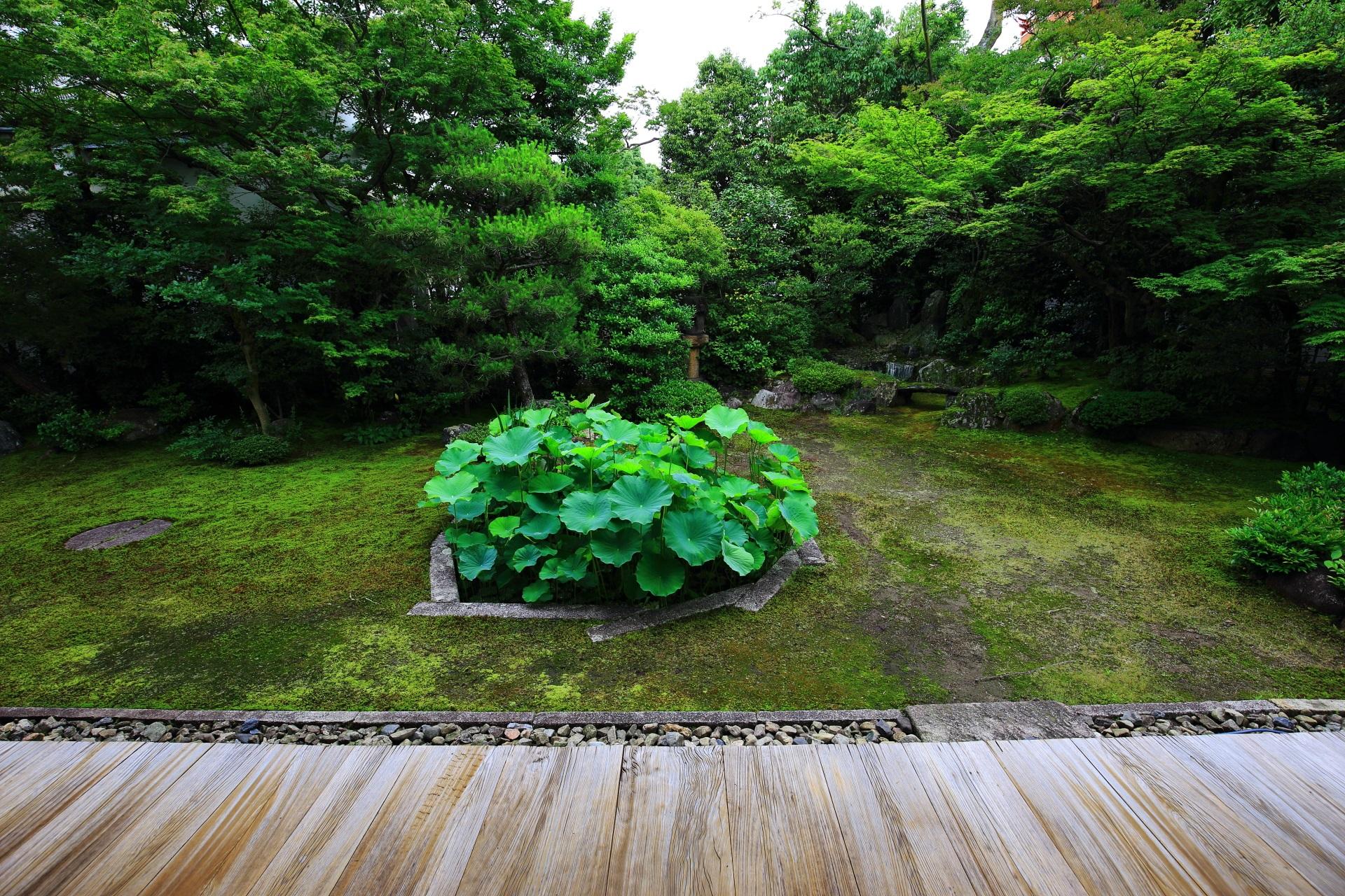 穴場の庭園の巴の庭