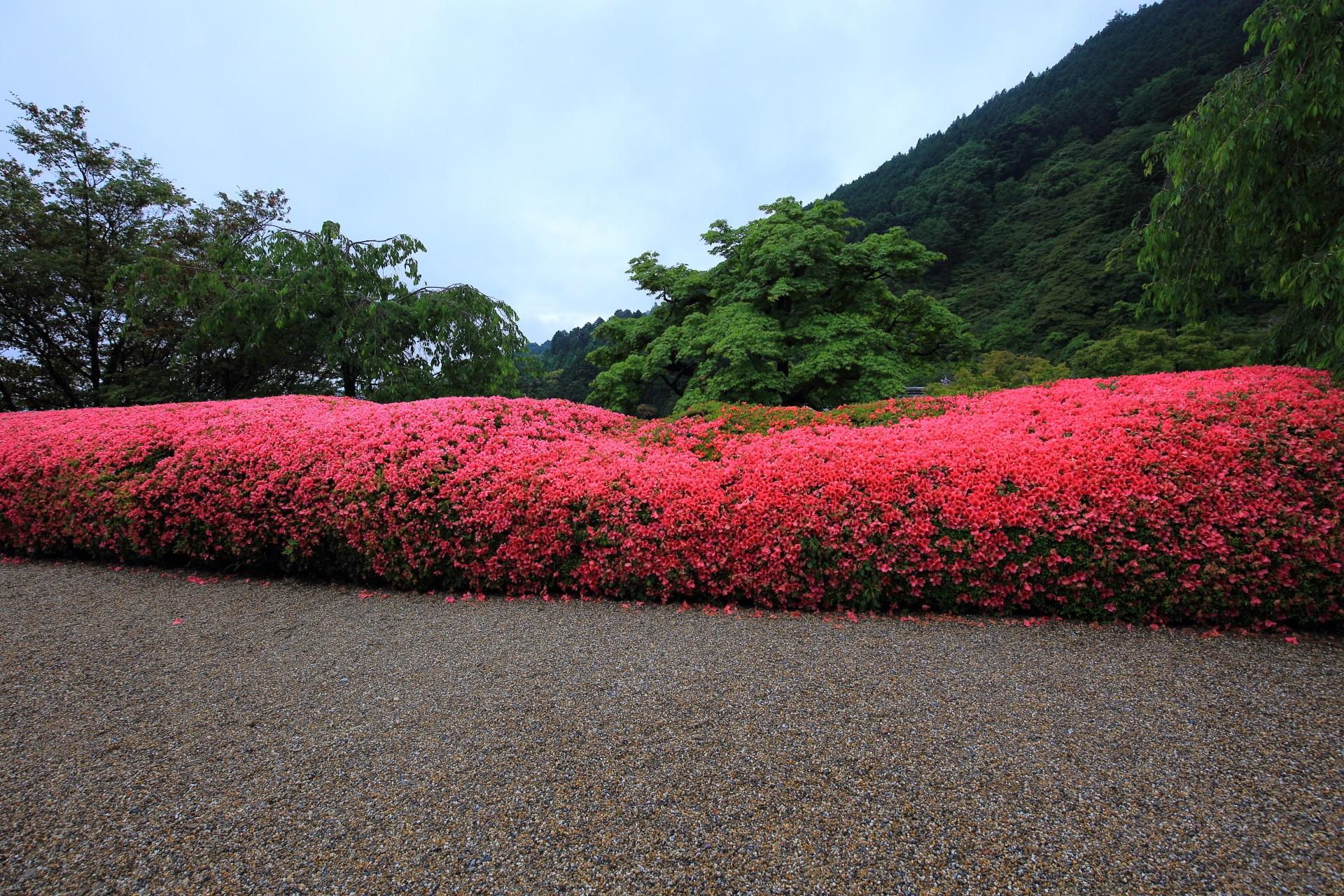 花の溢れるお見事なピンクのサツキロール