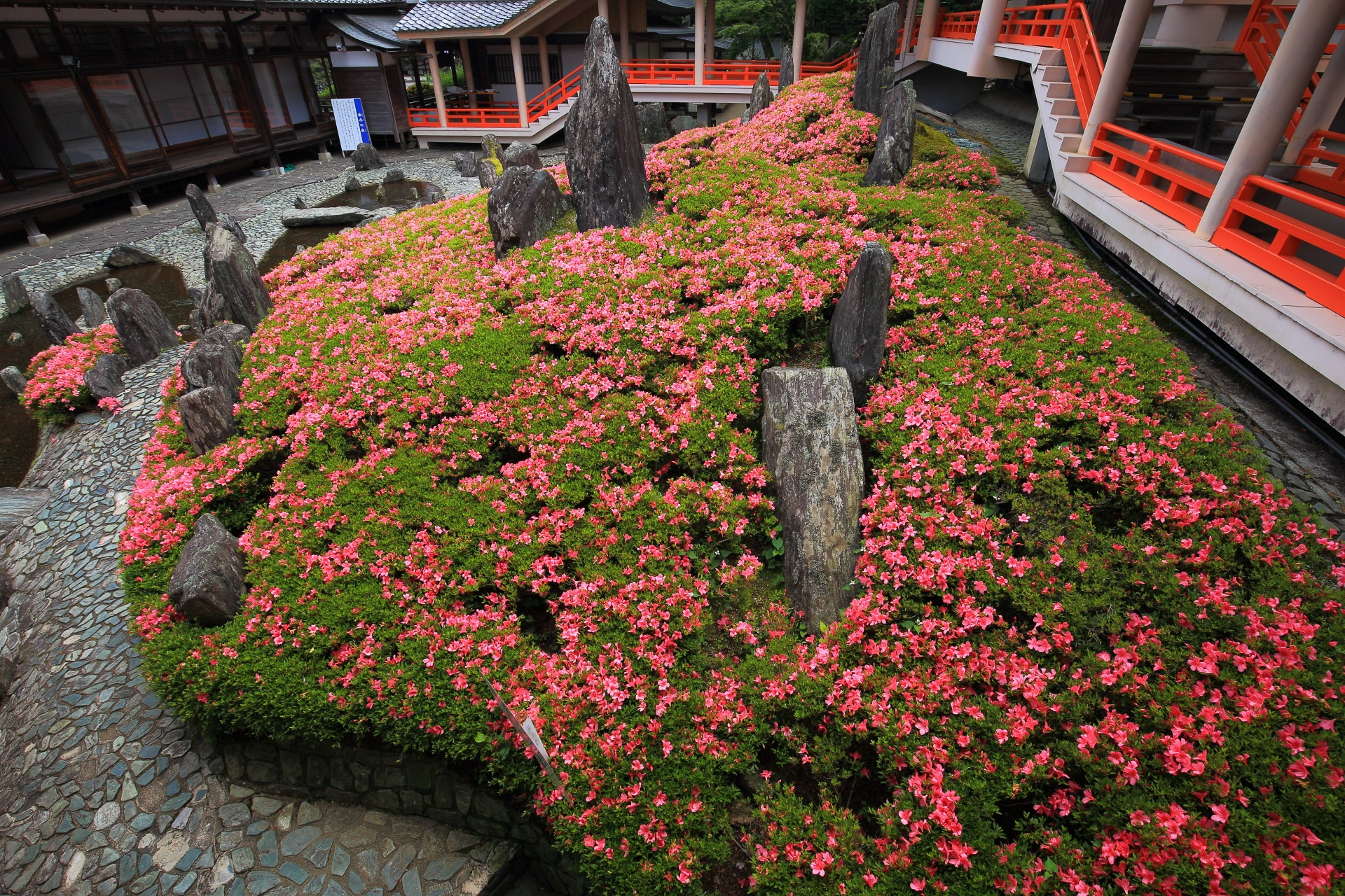 曲水の庭の圧巻のサツキの情景