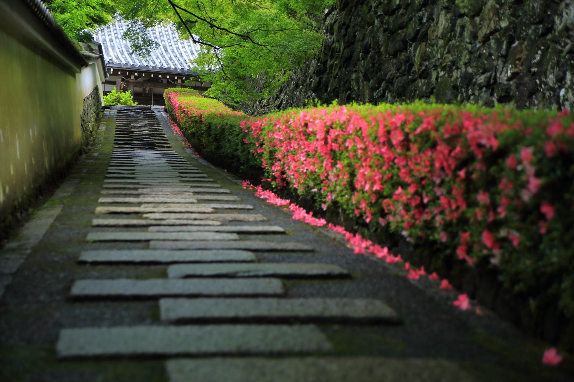 行く価値は十分すぎるくらいにあるサツキの名所の善峯寺(よしみねでら)