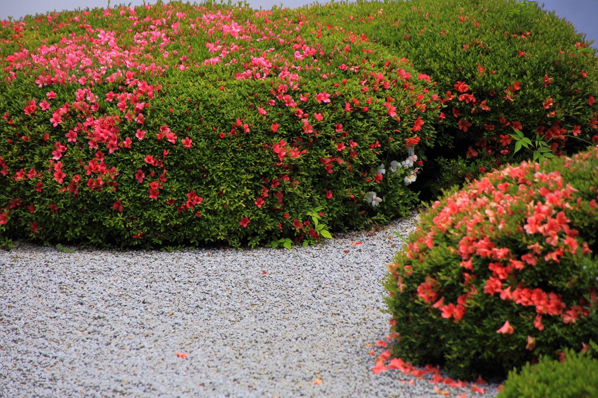 良く見るといろんな色の花がある正伝寺の皐月