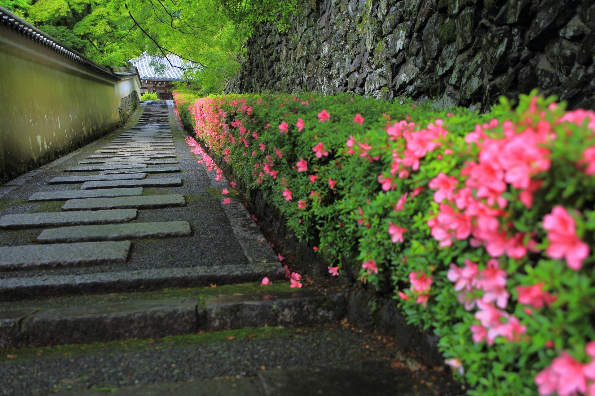 何時間でもいられそうな善峯寺の阿弥陀堂前の皐月の咲く参道