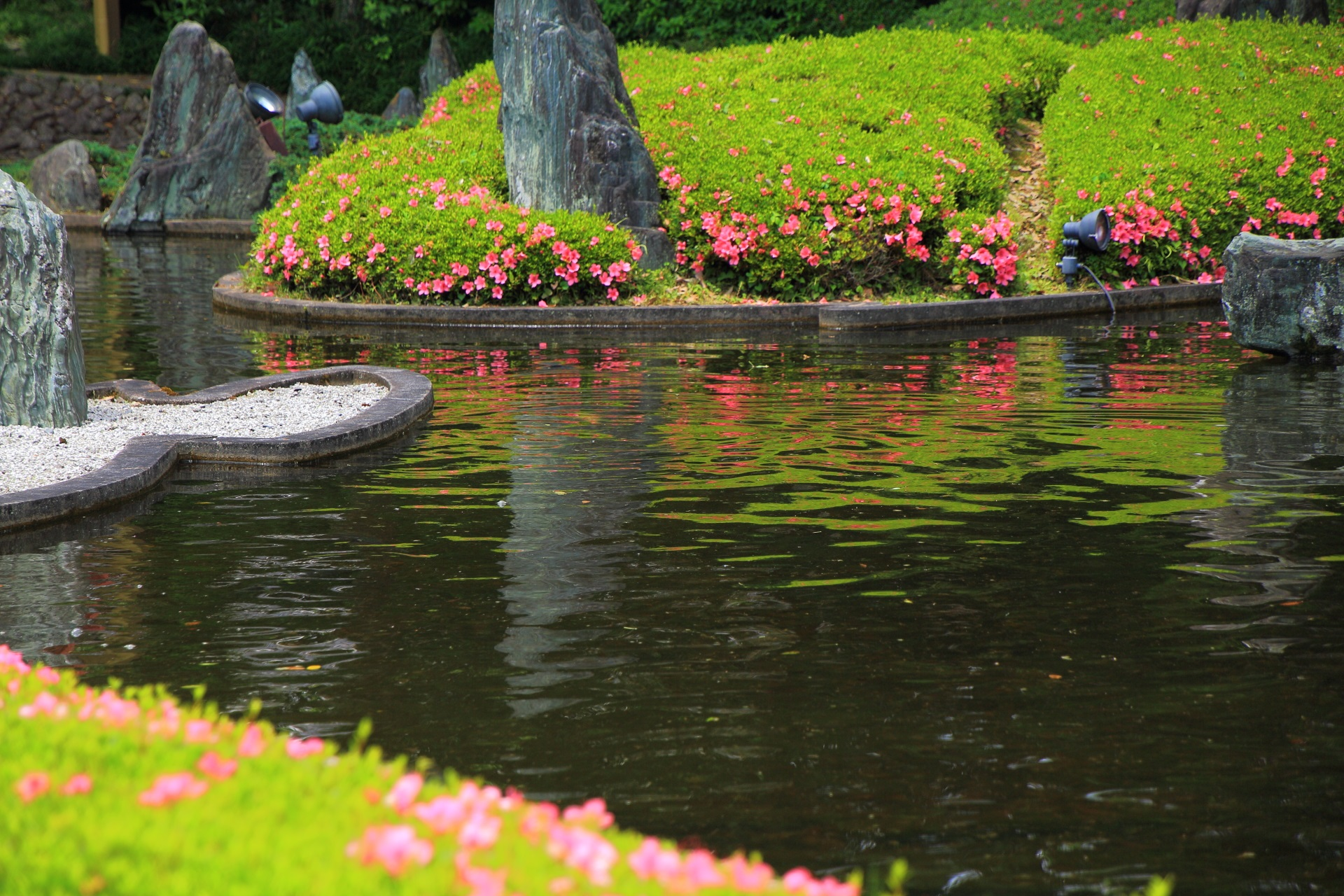 松尾大社の蓬莱の庭のおそらくパラパラ咲きの品種のサツキのピンクと緑