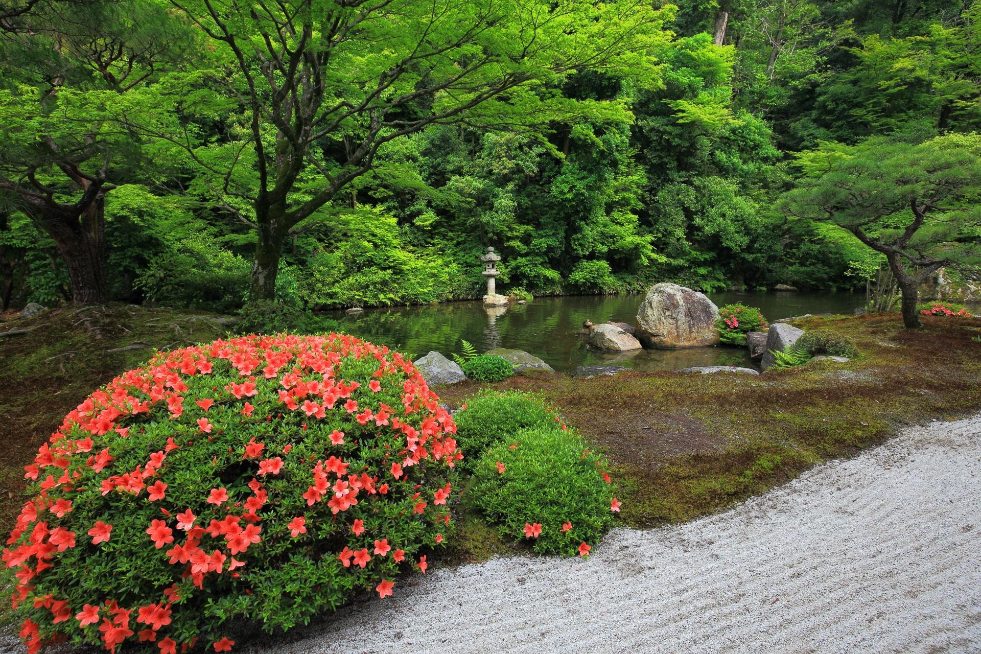 方丈庭園の春の水辺を彩る鮮やかなサツキと蟷螂